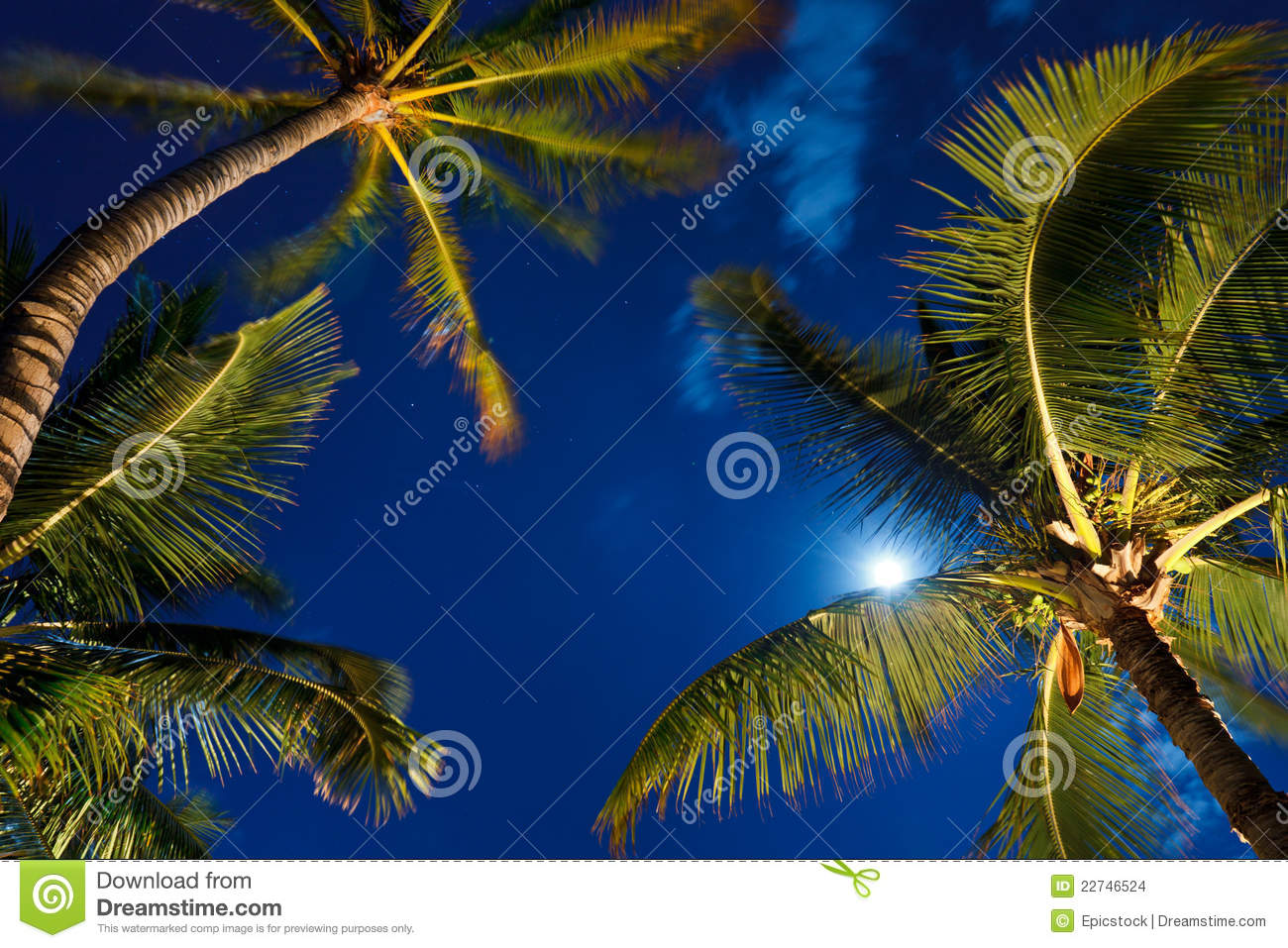 Tropical Night Sky Stock Images - Image: 22746524