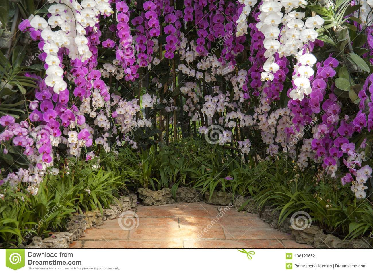 Tropical Orchid Garden Landscaping With Tropical Plants Stock Photo Image Of Park Rainforest 106129652