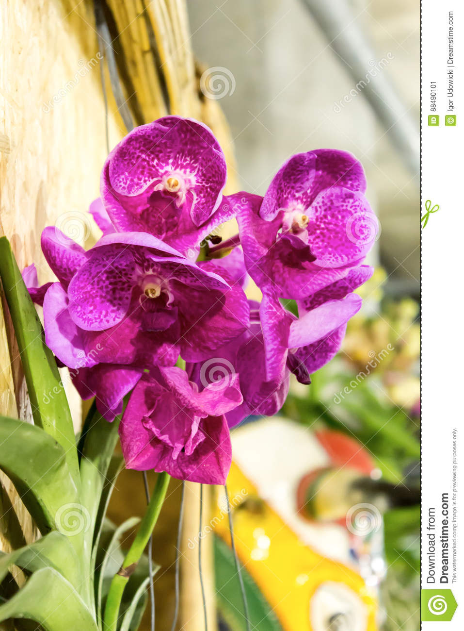 Tropical Orchid Is One Of The Most Beautiful Flowers On Earth. Stock ...