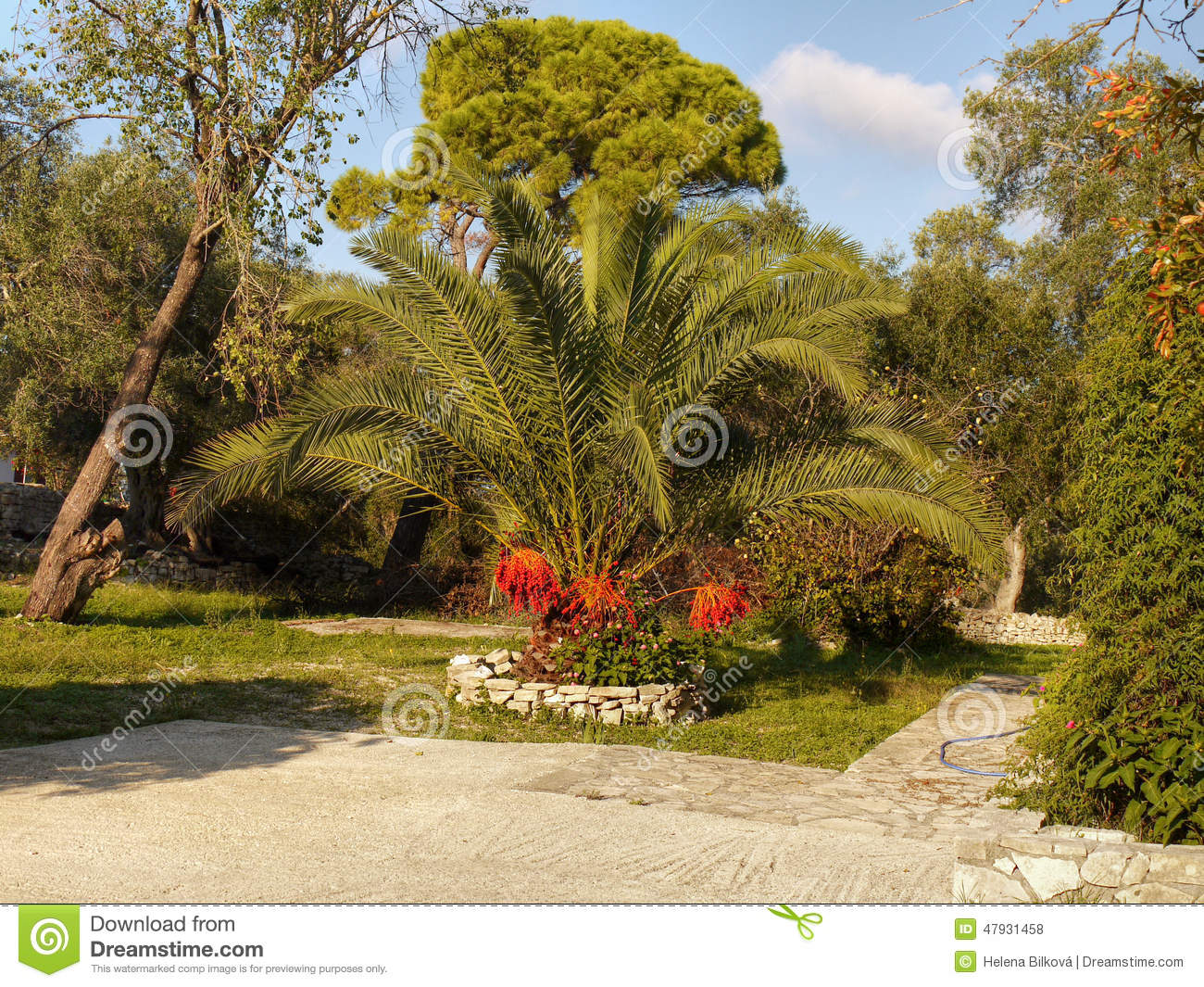 Tropical Palm Garden stock photo. Image of cottage, flowers - 47931458