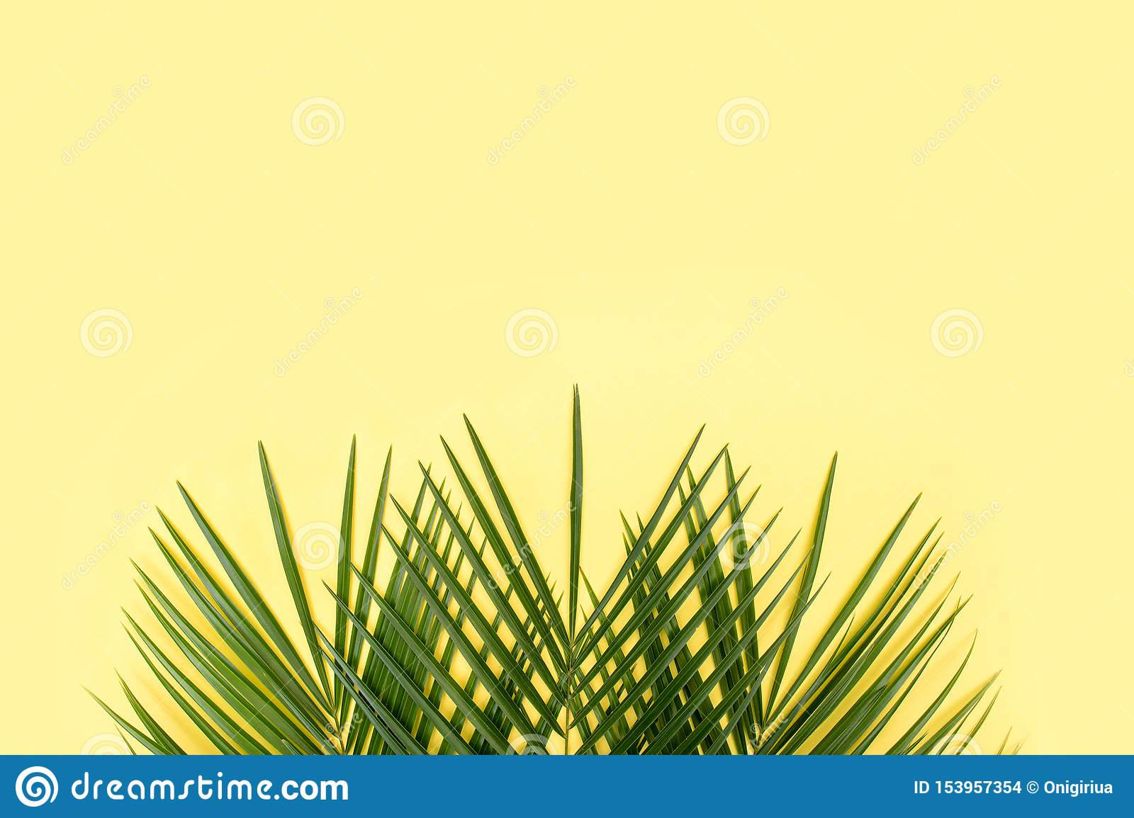 Tropical palm leaf on yellow background.