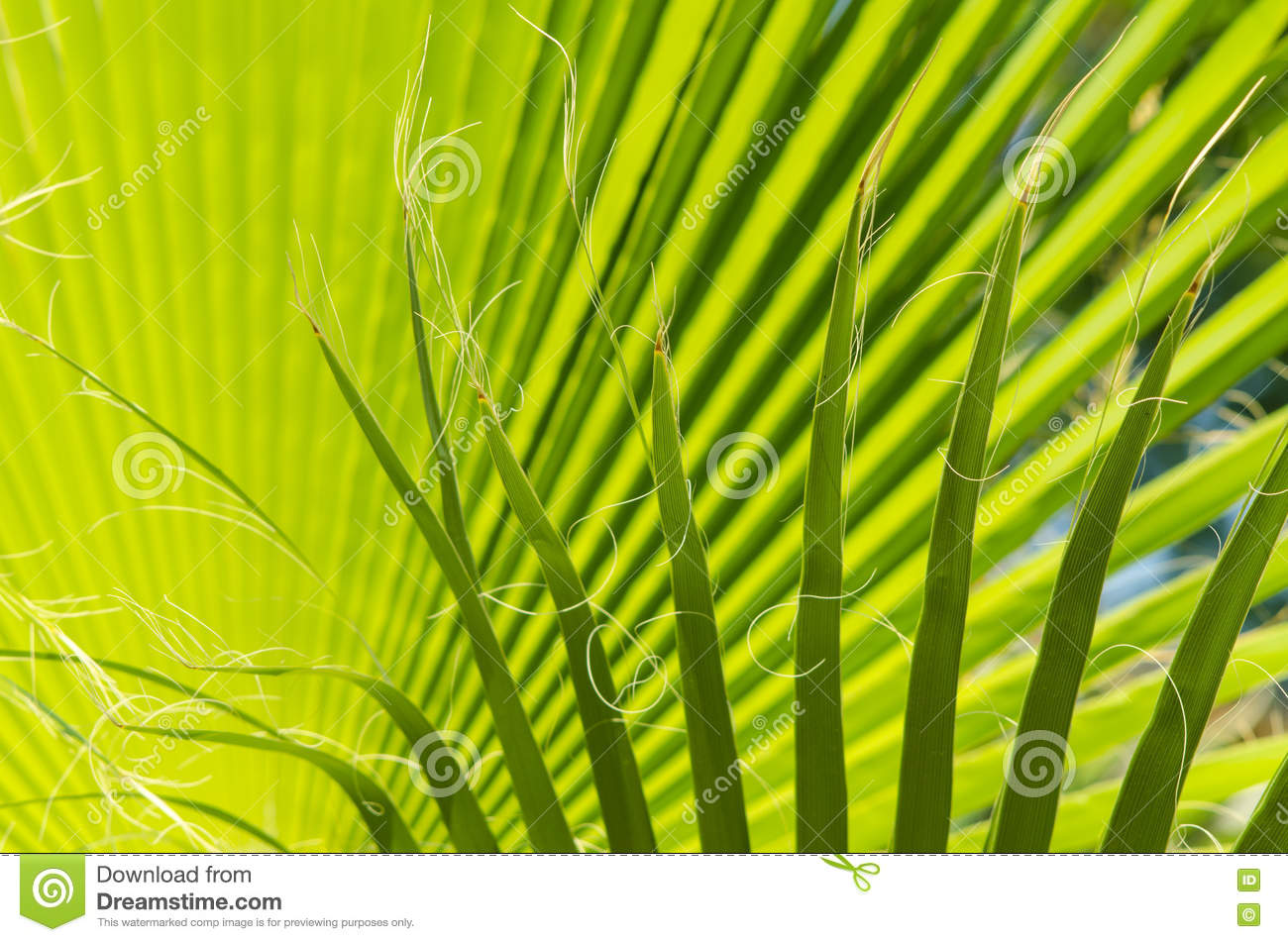 Tropical Palm Leaves Close Up View Of Fresh Green Palm Tree Leaf Stock Photo Image Of Color Coconut 75408192 Sign up for free and download 15 free images every day! tropical palm leaves close up view of fresh green palm tree leaf stock photo image of color coconut 75408192