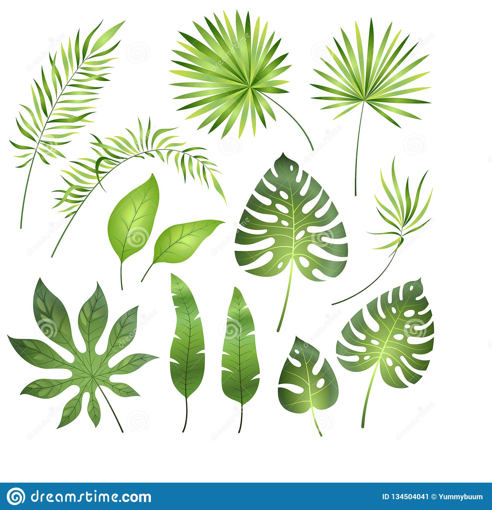 Tropical Palm Leaves Jungle Exotic Leaf Palm Royal Fern Plumeria Summer Tropical Paradise Beach Holiday Botanical Set Stock Vector Illustration Of Decorative Isolated 134504041 Great savings & free delivery / collection on many items. https www dreamstime com tropical palm leaves jungle exotic leaf royal fern plumeria summer paradise beach holiday botanical set vector illustration image134504041