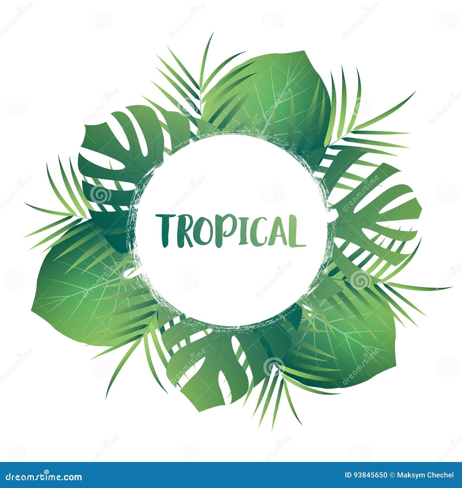 Tropical palm leaves vector exotic leaves tropic card template tropical palm leaves vector exotic leaves tropic card template with jungle leaves toneelgroepblik Images