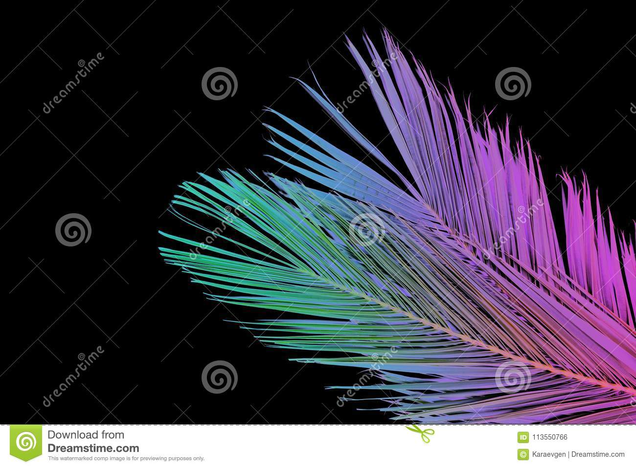 tropical palm leaves in vibrant gradient neon colors stock photo