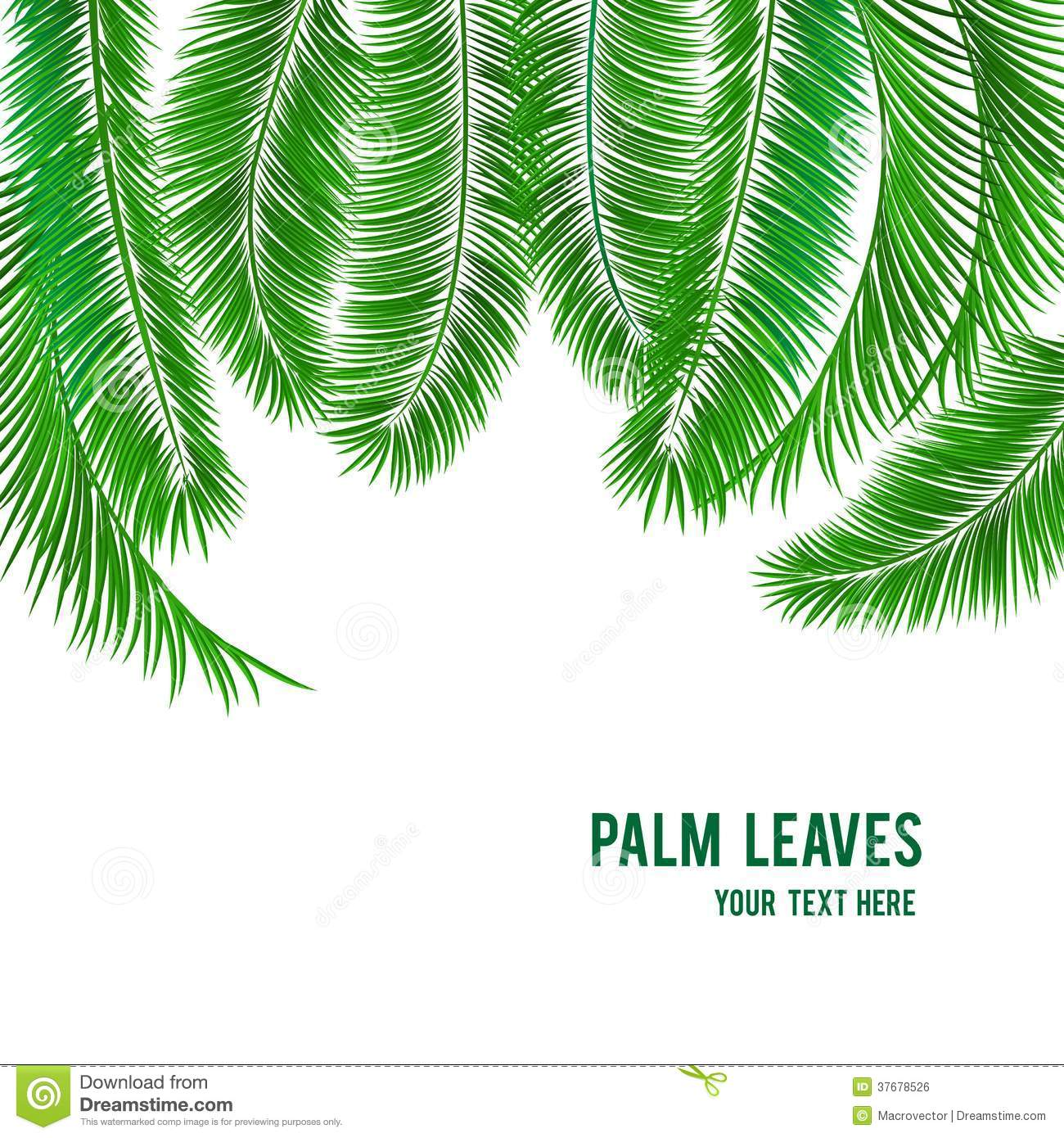 tropical palm tree background banner royalty free stock image
