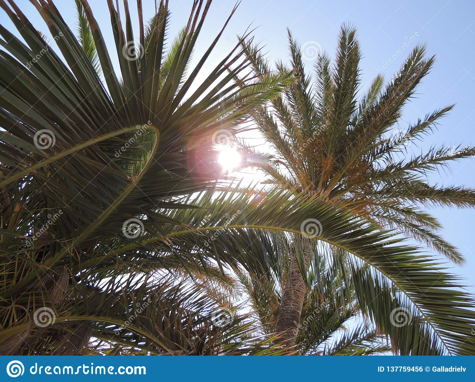 Tropical palm tree over beautiful blue sky. Relaxing, discovering and enjoying the tropical vacations.