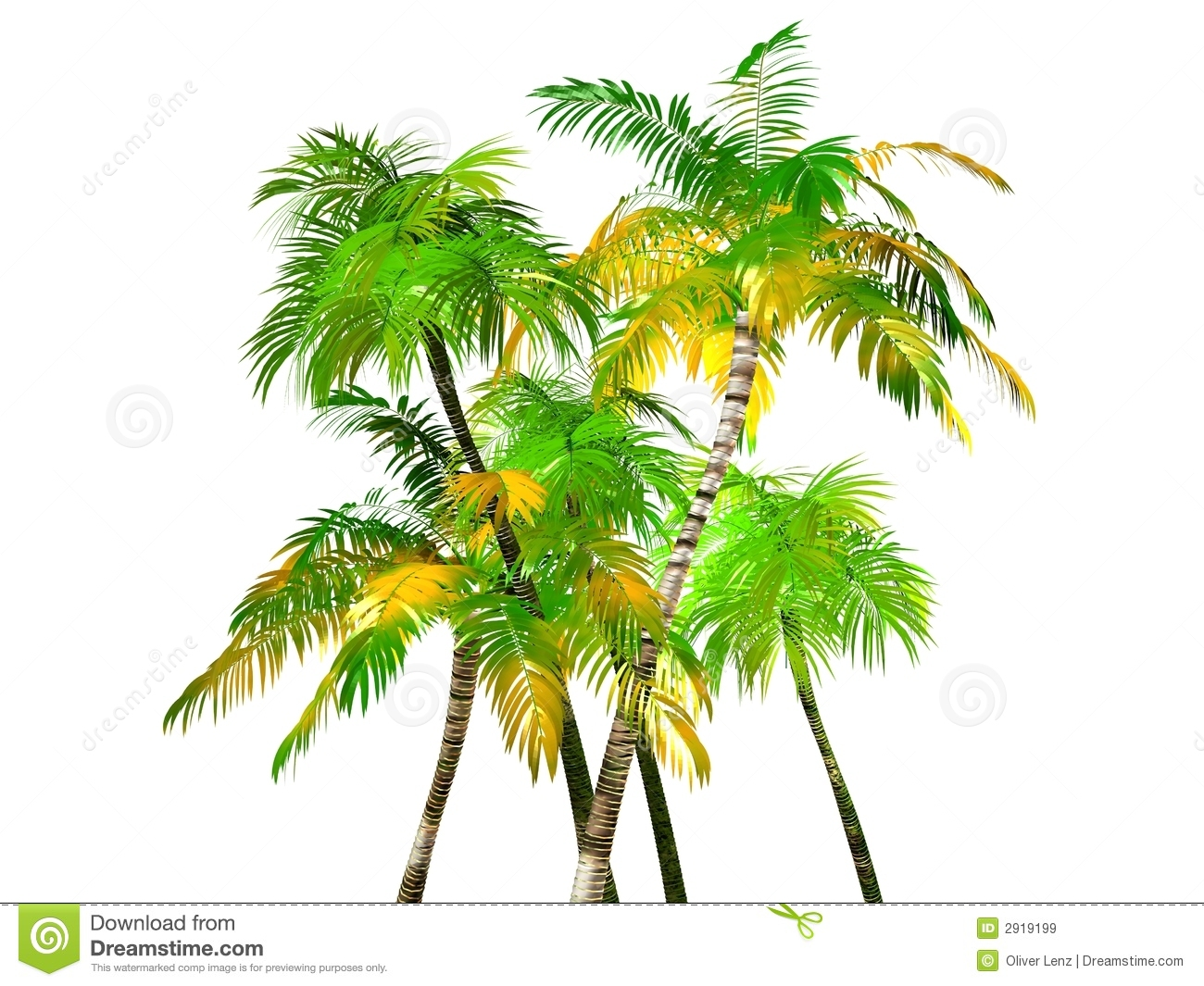 clump of palm trees royalty free stock photography image 31019597