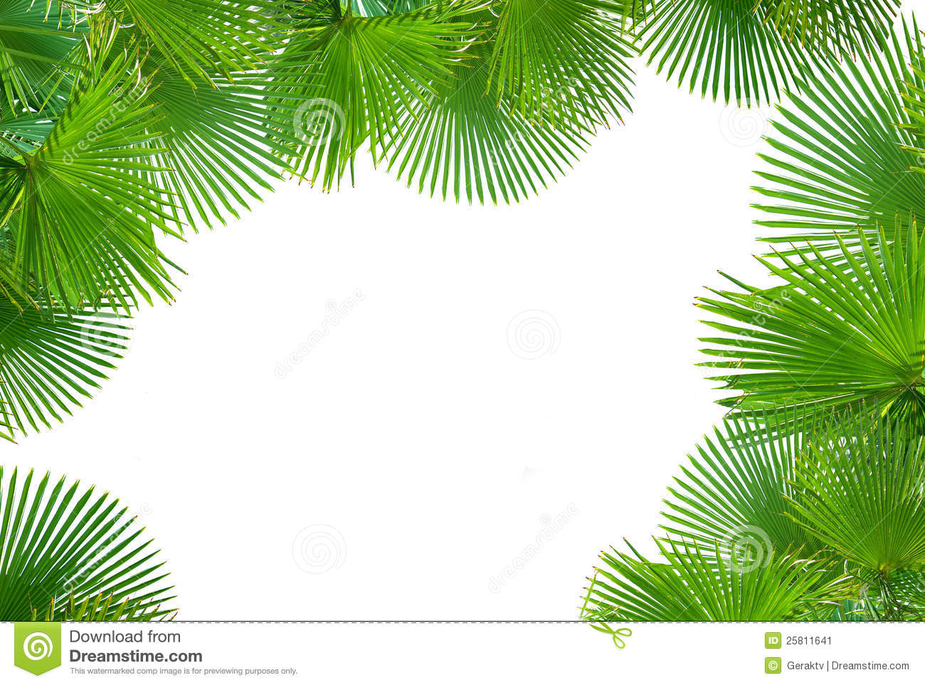 tropical palms on white background for text stock image