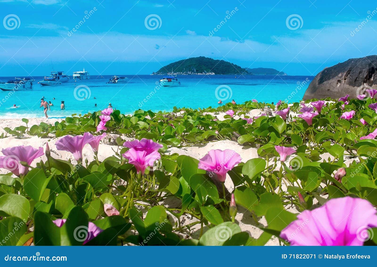 Tropical flowers beach