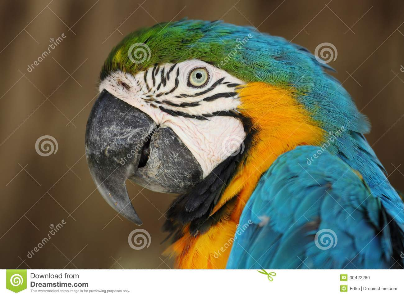 Tropical parrot stock photo  Image of asia, beaks, mate