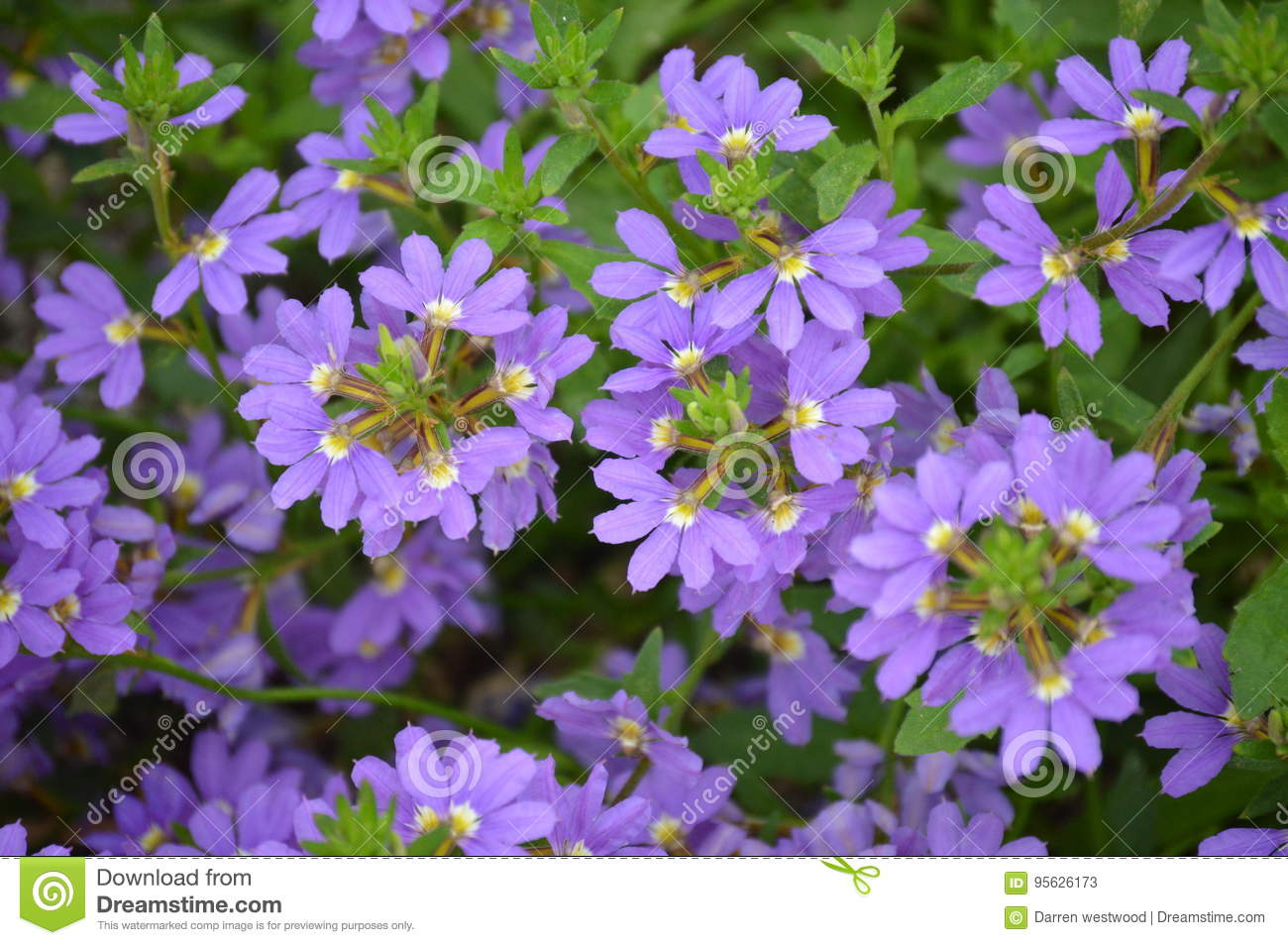 Tropical Pink And Lilac Flowers Stock Image Image Of Tropical