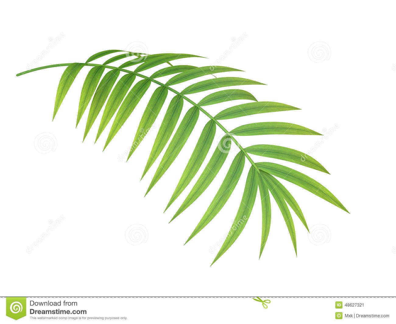Tropical Plant Branch Stock Photo - Image: 48627321