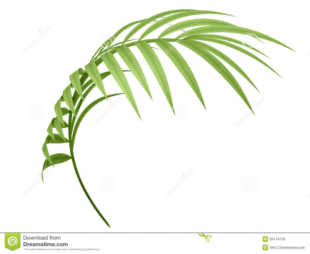 tropical plant branch stock illustration illustration of free palm tree vector png free palm tree vector png