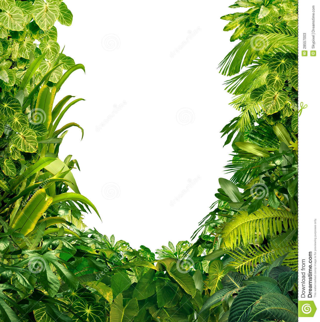 Tropical Plants Blank Frame Stock Photos Image 28557003