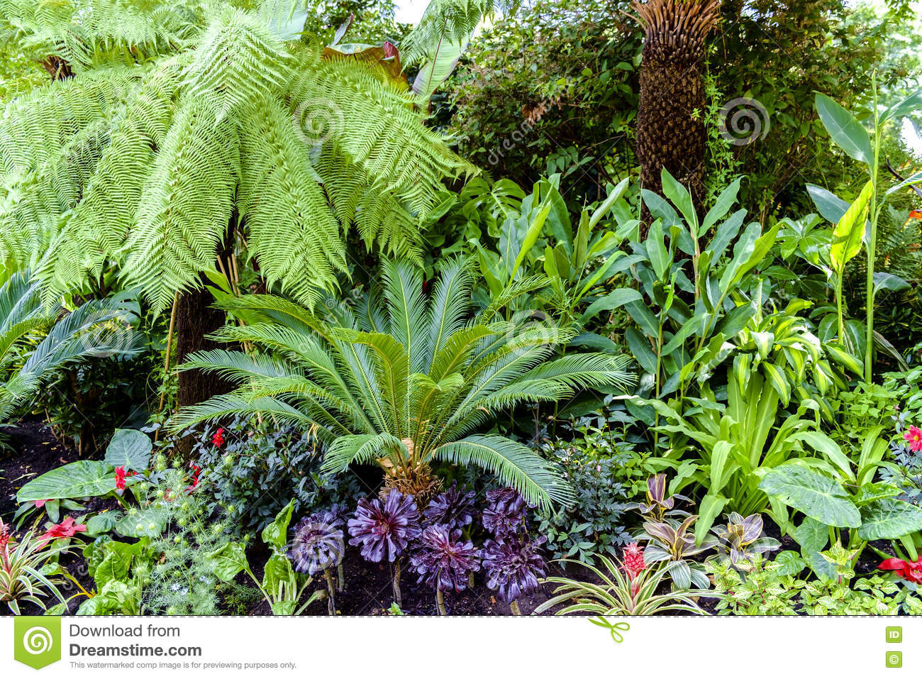 Nice Uk Tropical Plants Part - 11: Royalty-Free Stock Photo. Download Tropical Plants ...