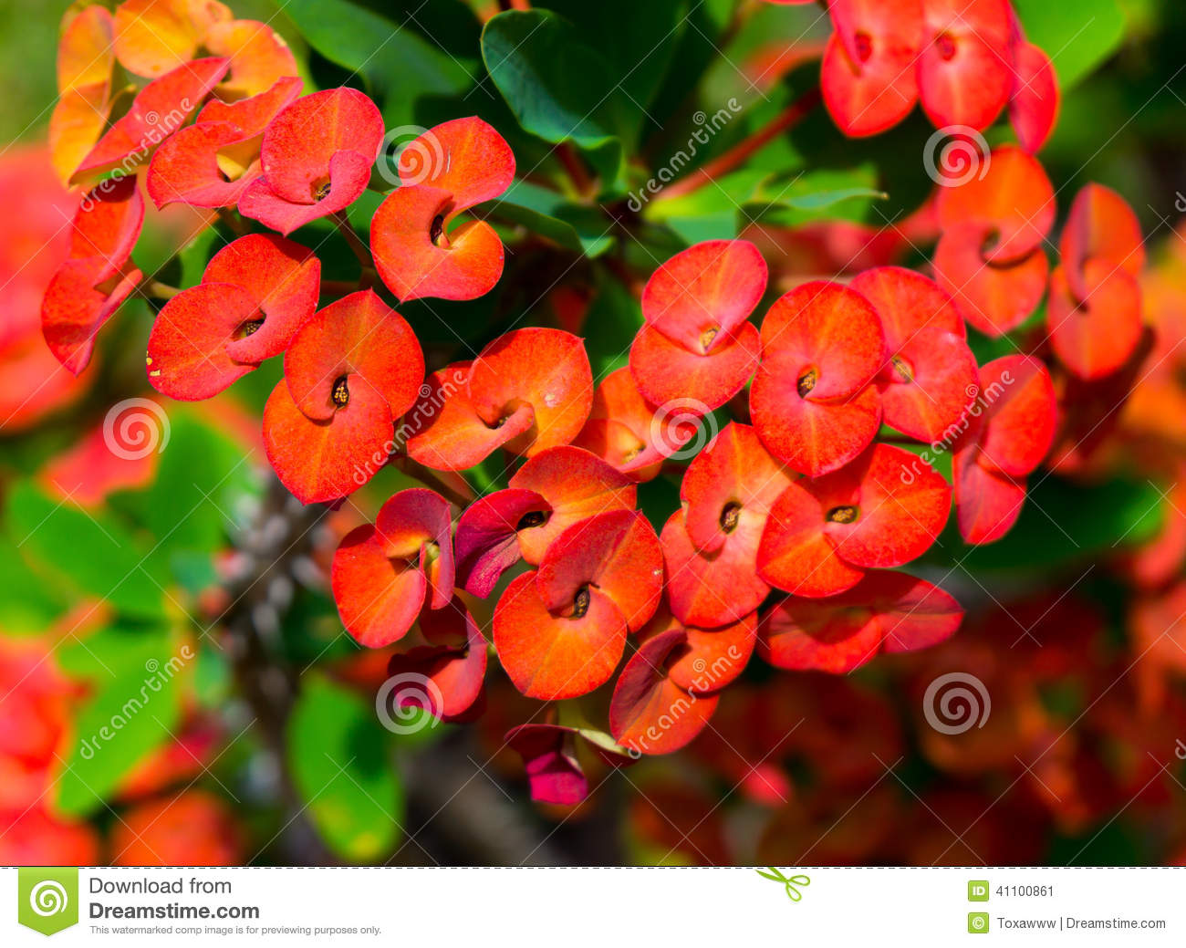Tropical plants and flowers background stock image image of tropical plants and flowers background izmirmasajfo