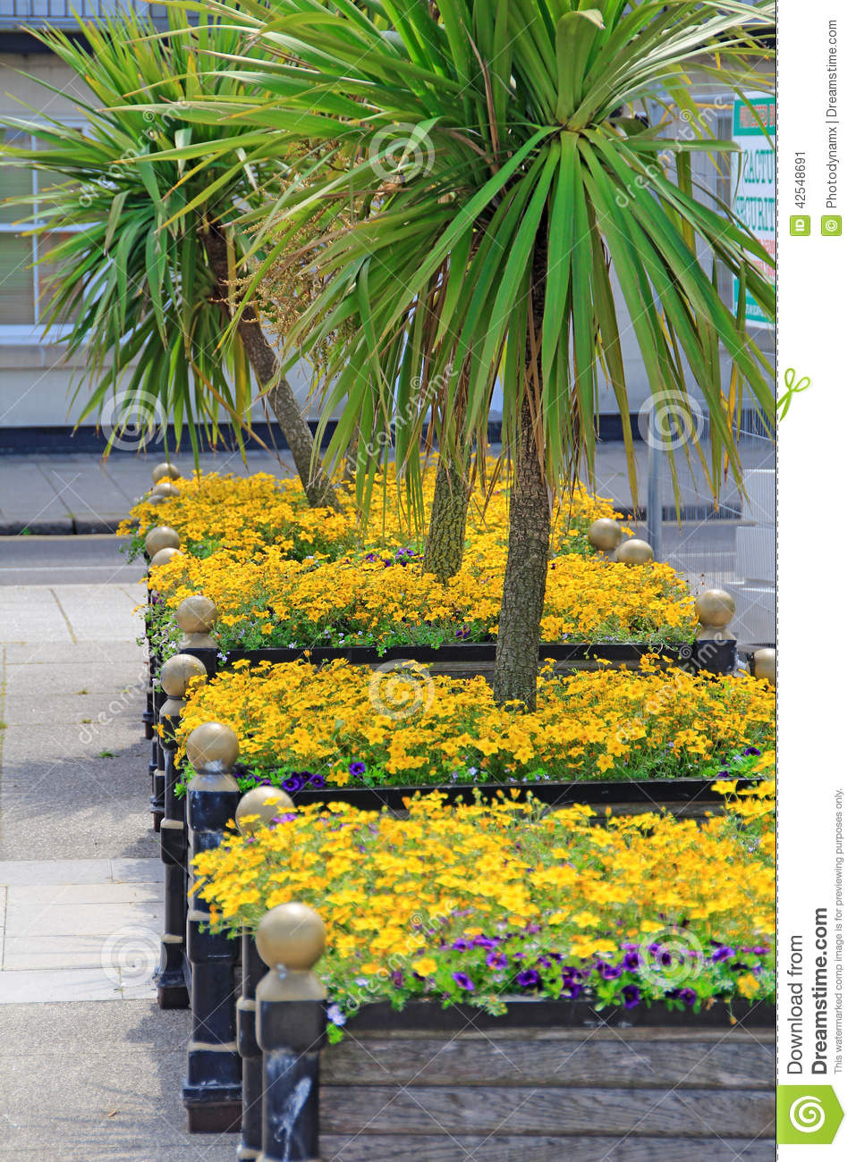 Tropical Plants And Flowers Stock Image Image Of Garden Nature