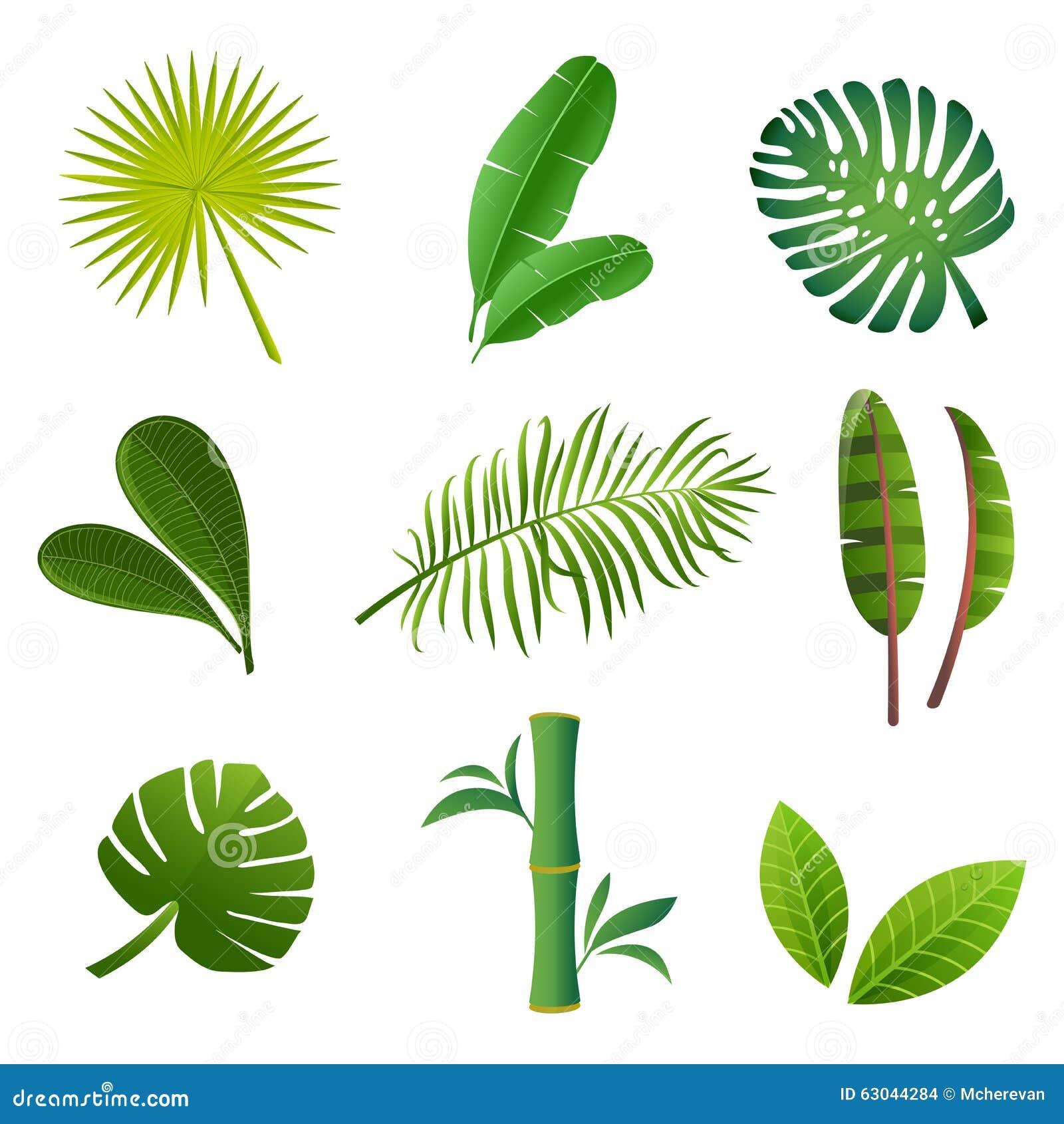 Tropical plants set vector illustration of green leaves - Plantas de hojas verdes ...