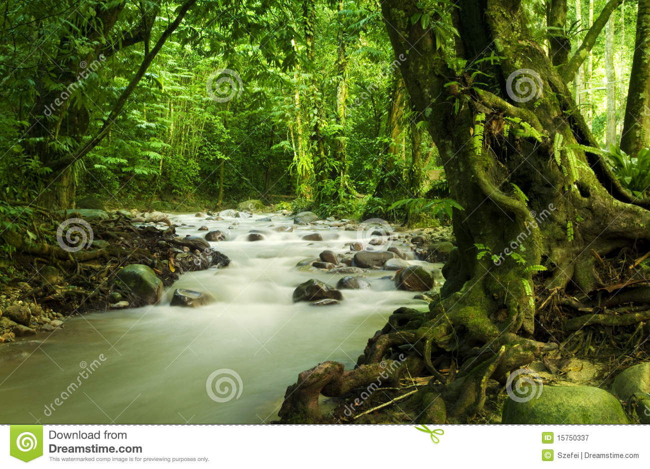 Tropical Rainforest And River Royalty Free Stock Photography - Image ...