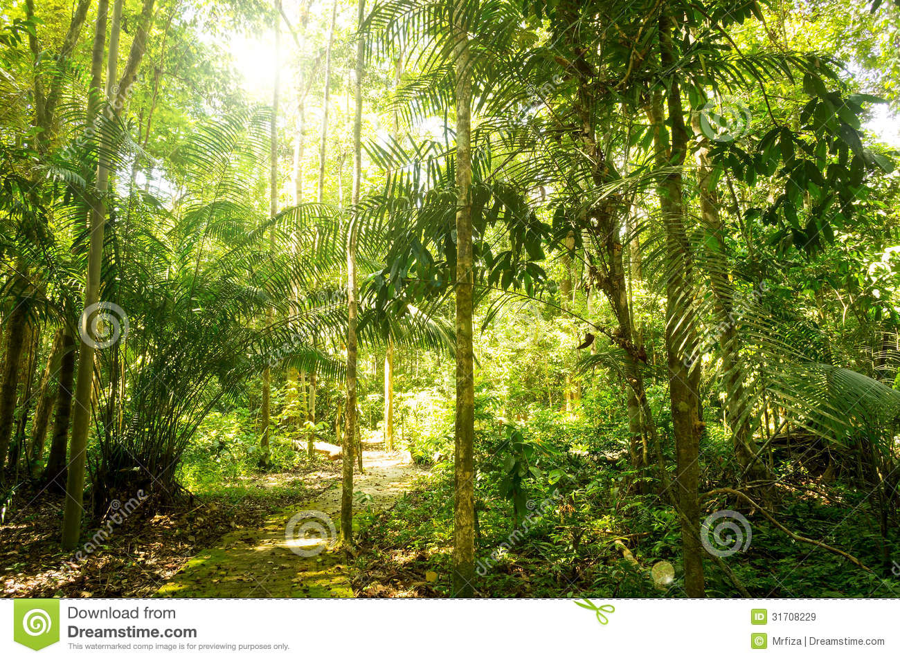 Tropical Rainforest Sunlight Tropical rainforest with sunnyTropical Rainforest Sunlight