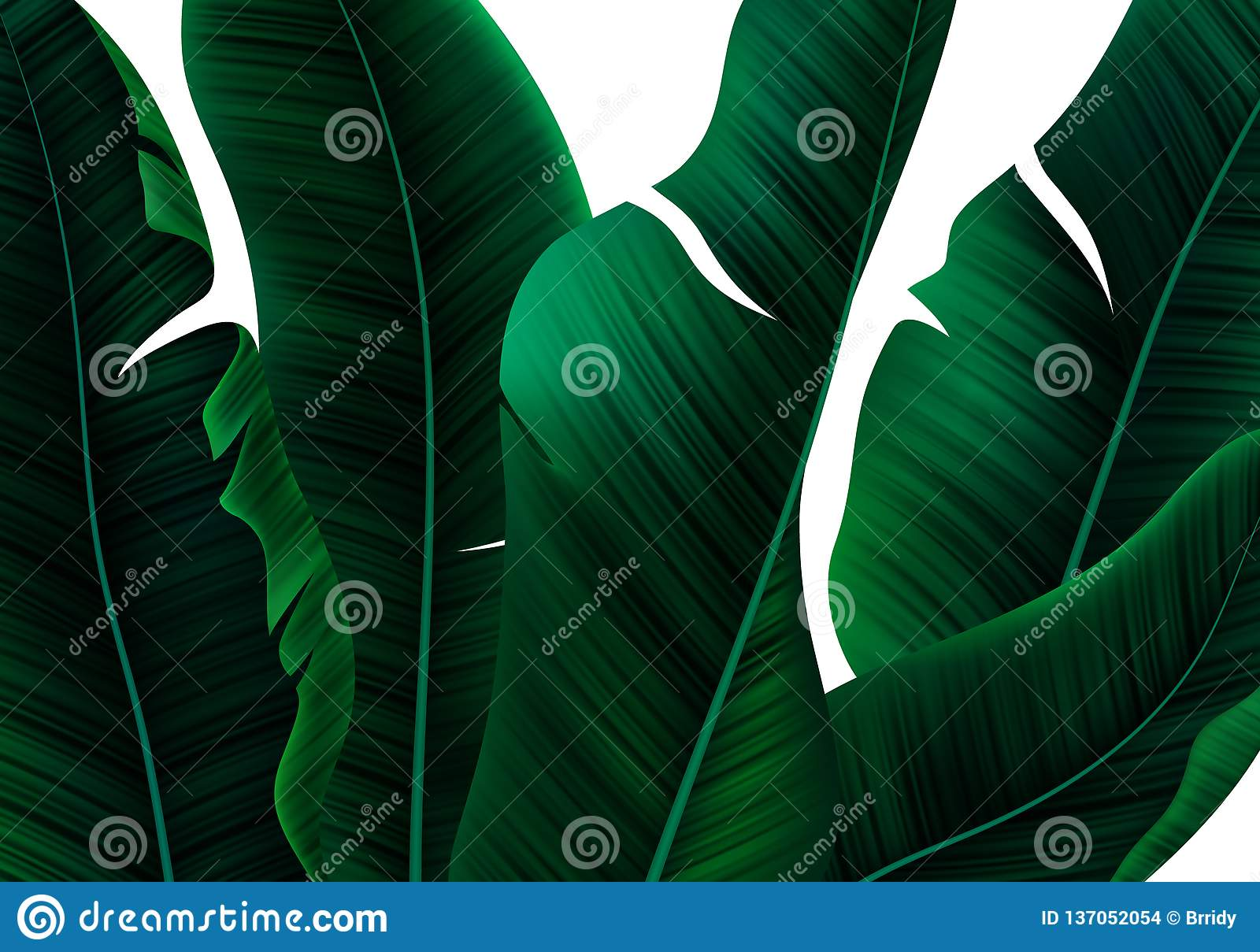 Tropical Realistic Palm Leaves Vector Floral Pattern On