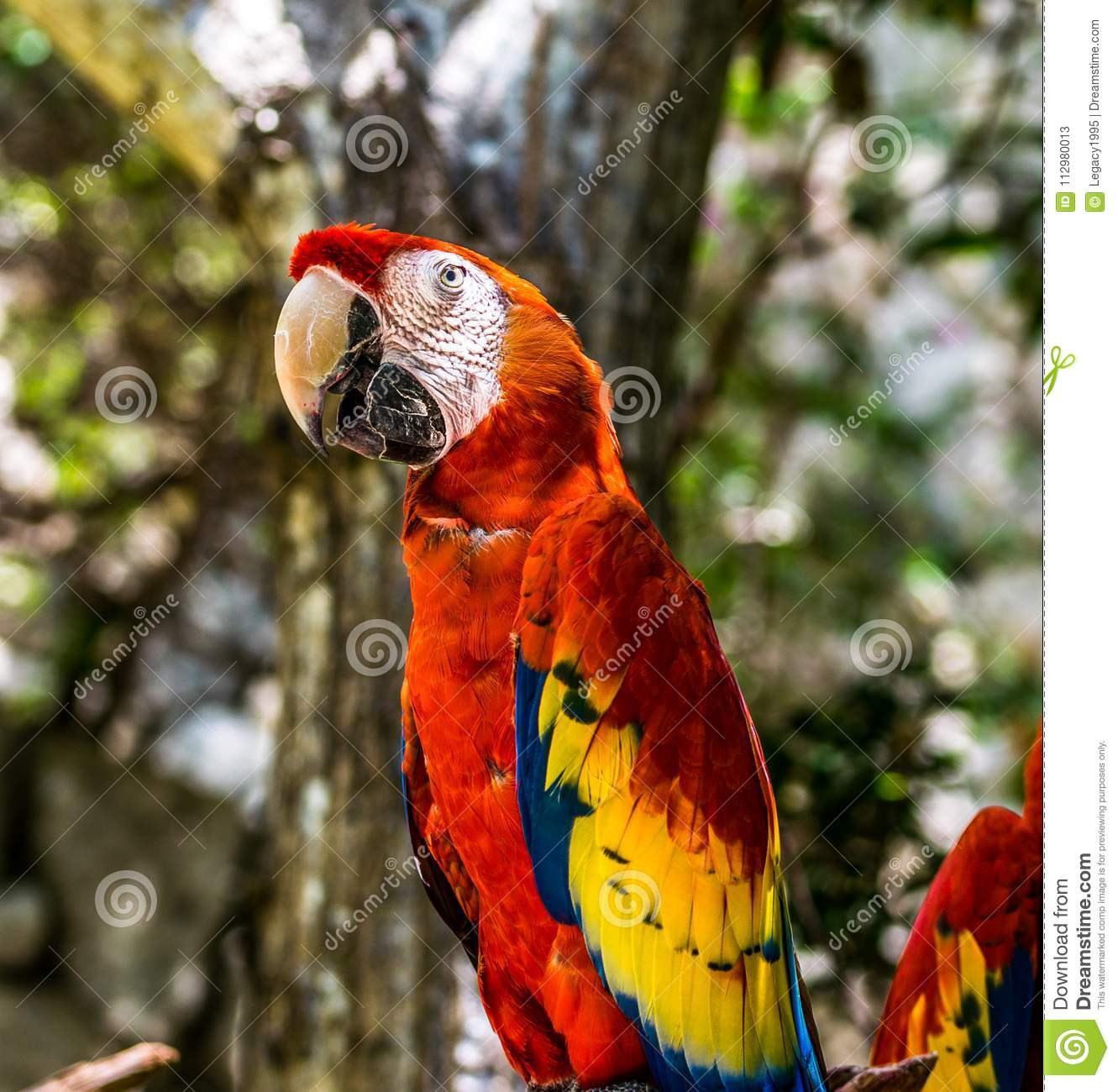 Tropical Red Parrots