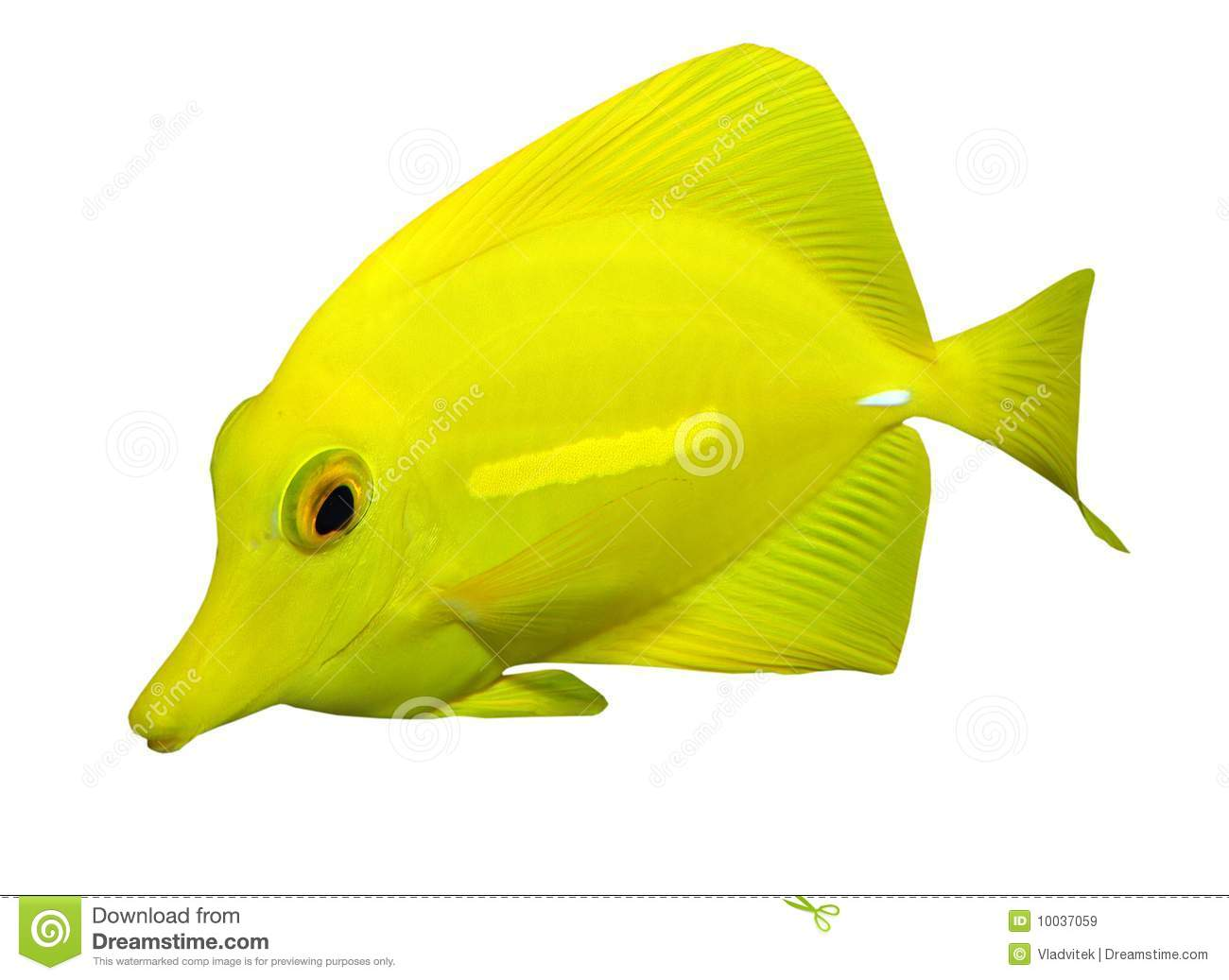 Tropical reef fish stock image image of multicolored for Image of fish