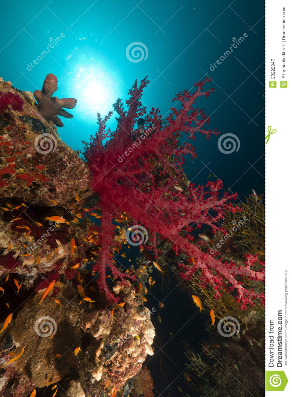 Tropical reef and fish in the red sea stock image for Red sea fish