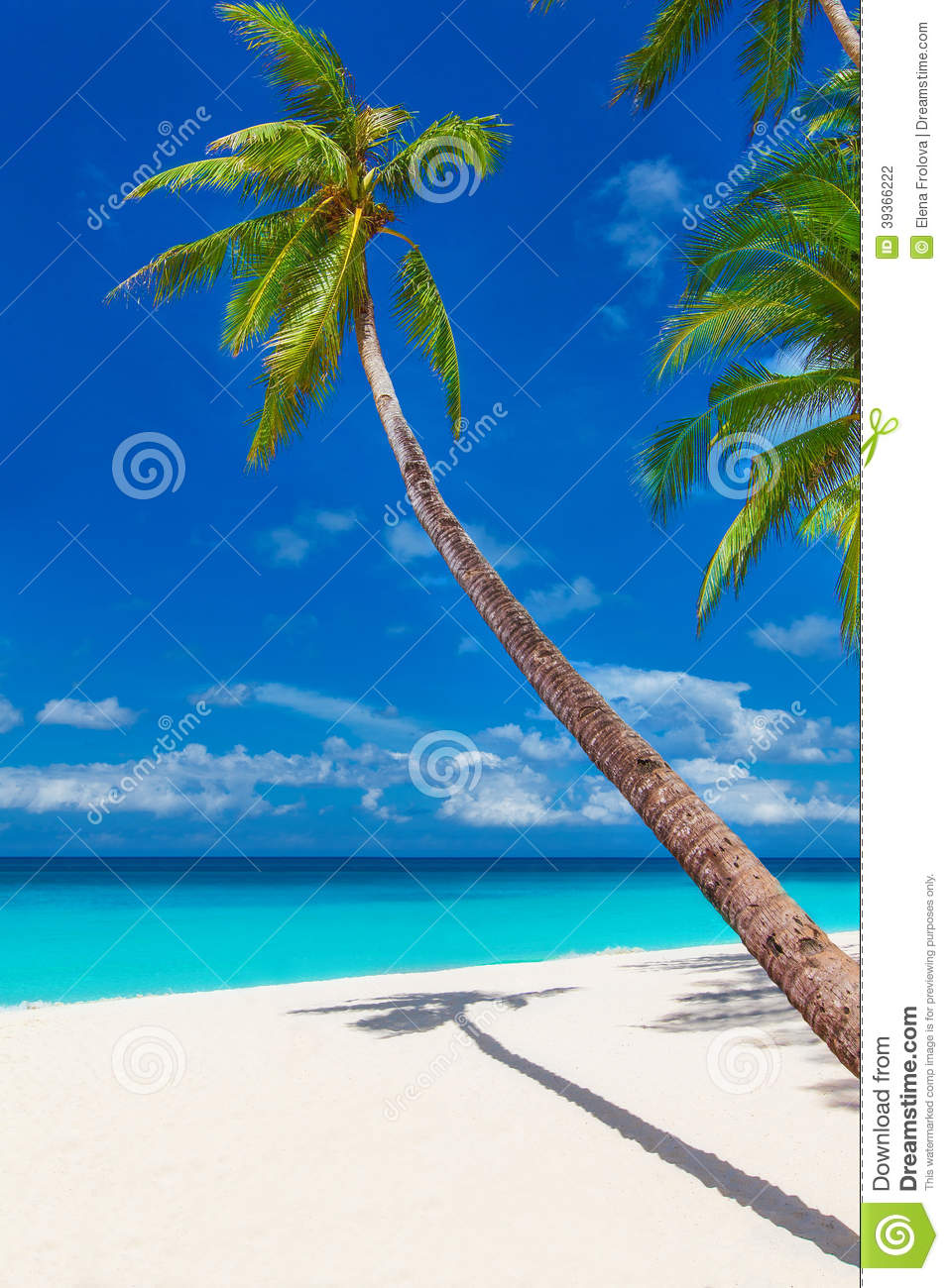 vacations summer palm - photo #45