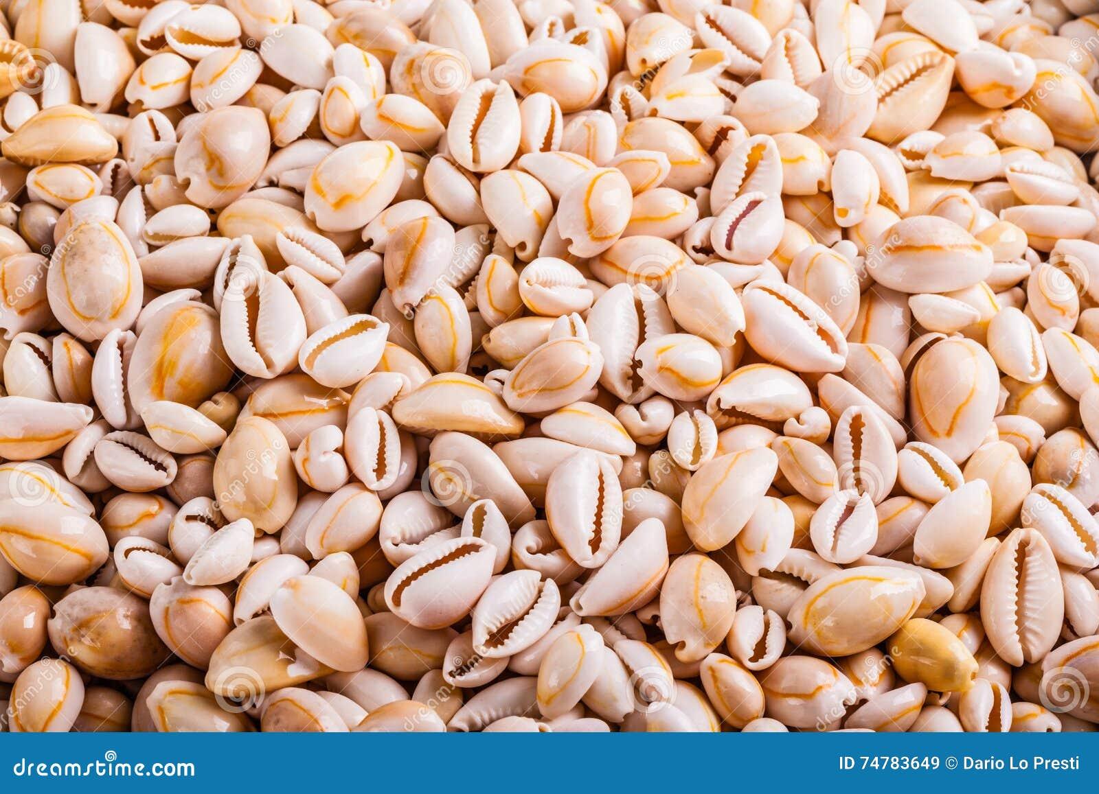 Tropical seashell heap stock image. Image of shell, assortment - 74783649