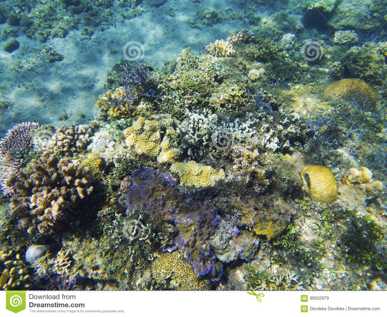 tropical seashore underwater landscape coral reef colorful view