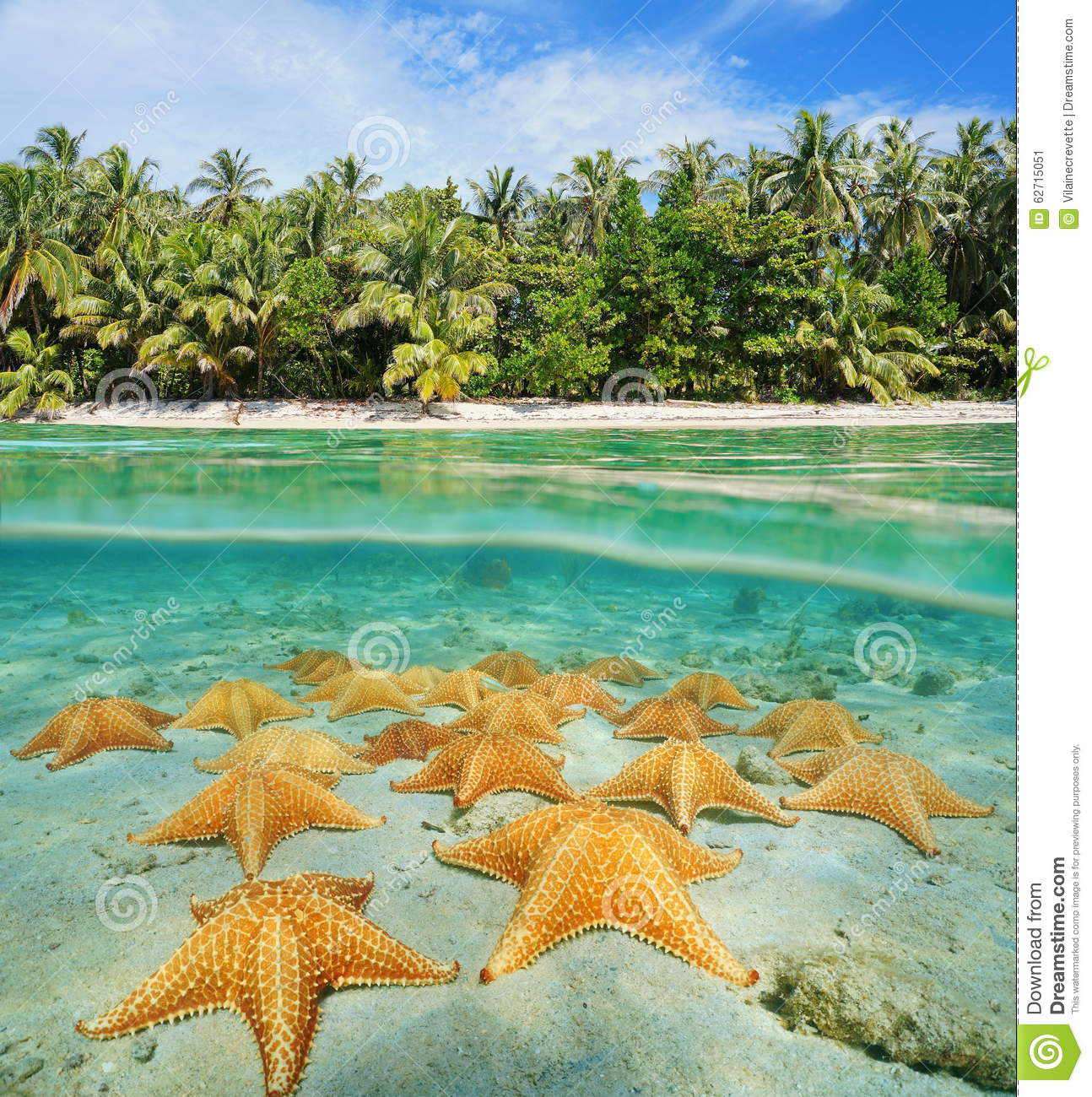 Tropical Beach And Peaceful Ocean: Tropical Shore Split With Sea Stars Underwater Stock Photo