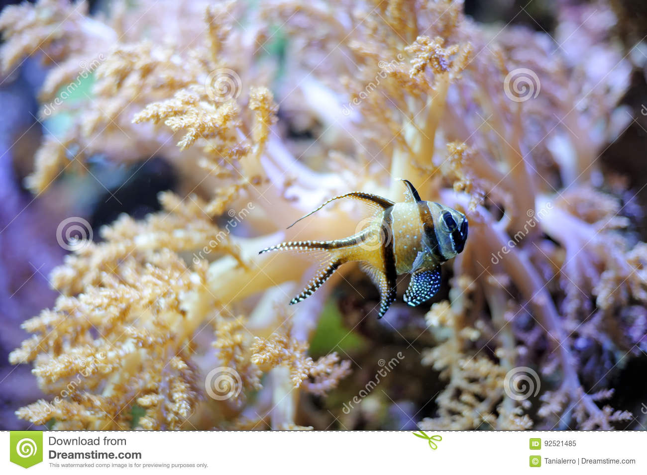 Tropical striped little fish stock image image 92521485 for Little fish swimming