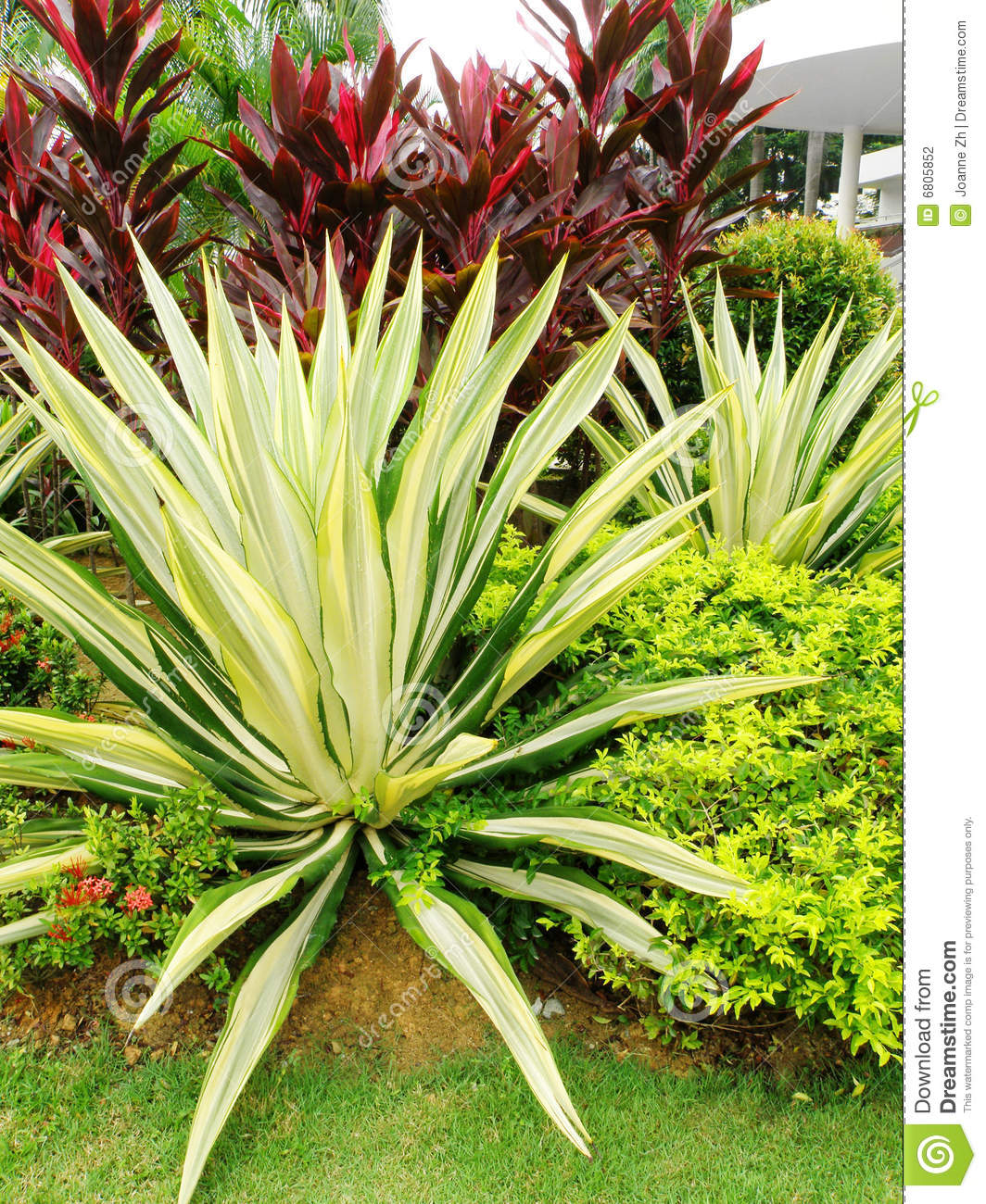 Tropical style landscaping stock photography image 6805852 for Landscape flowers and plants