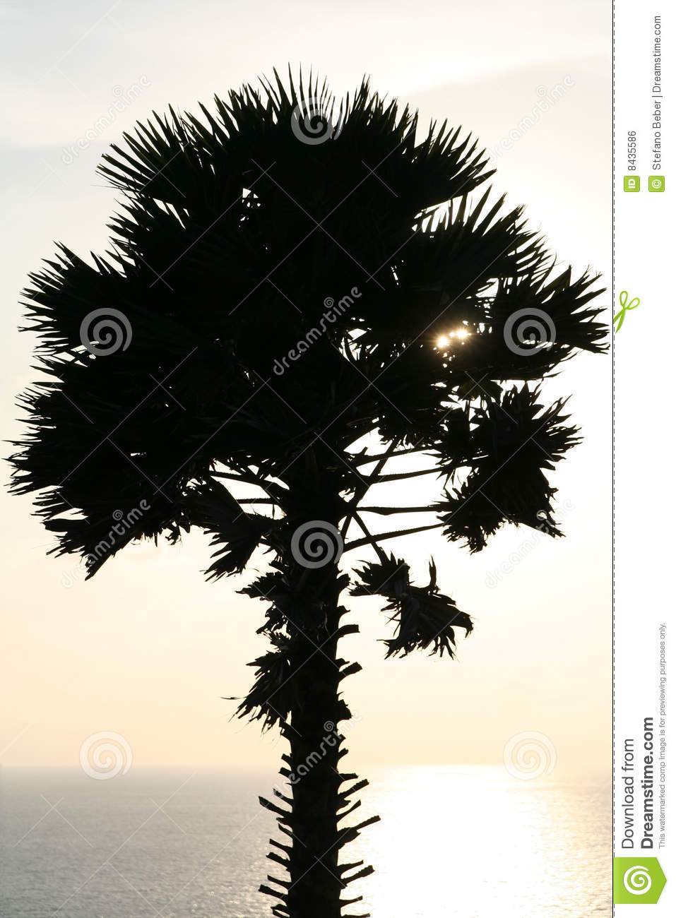 Tropical sunset with palm tree silhouette