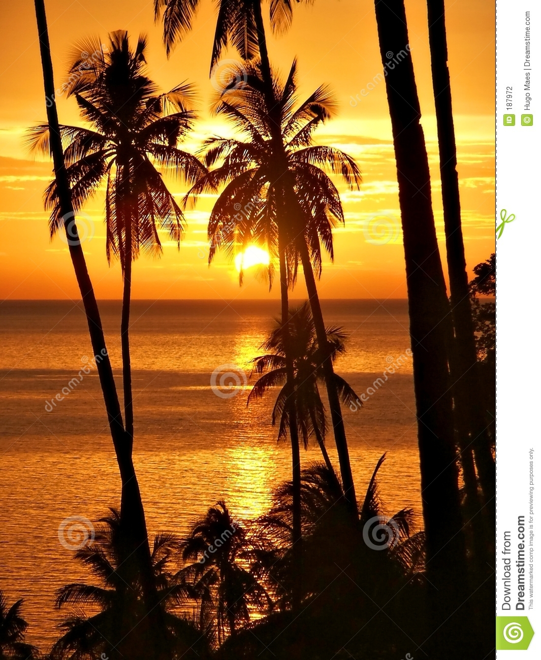 Tropical sunset with palm trees silhouette.