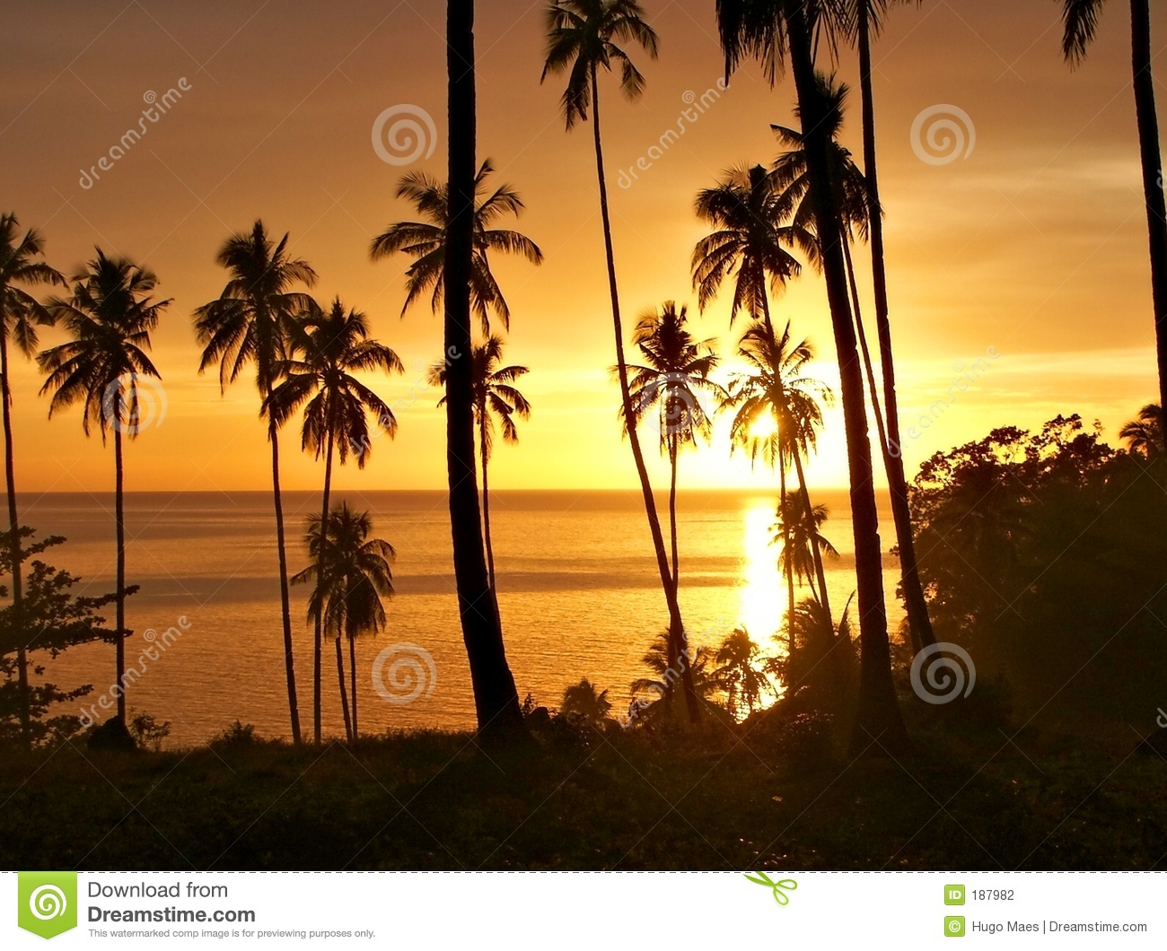 Tropical sunset with trees silhouette.