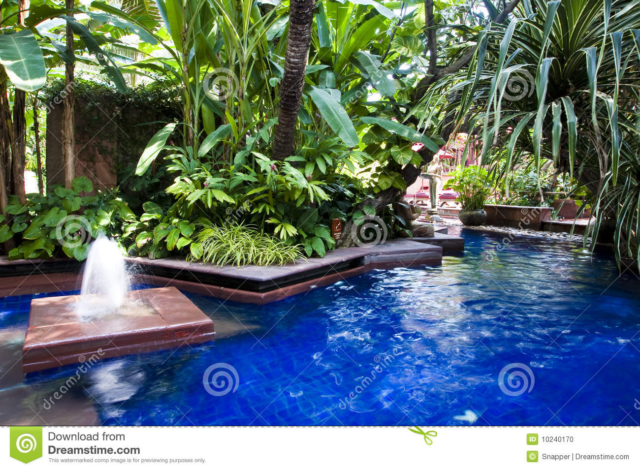 Tropical Swimming Pool Stock Photo Image 10240170