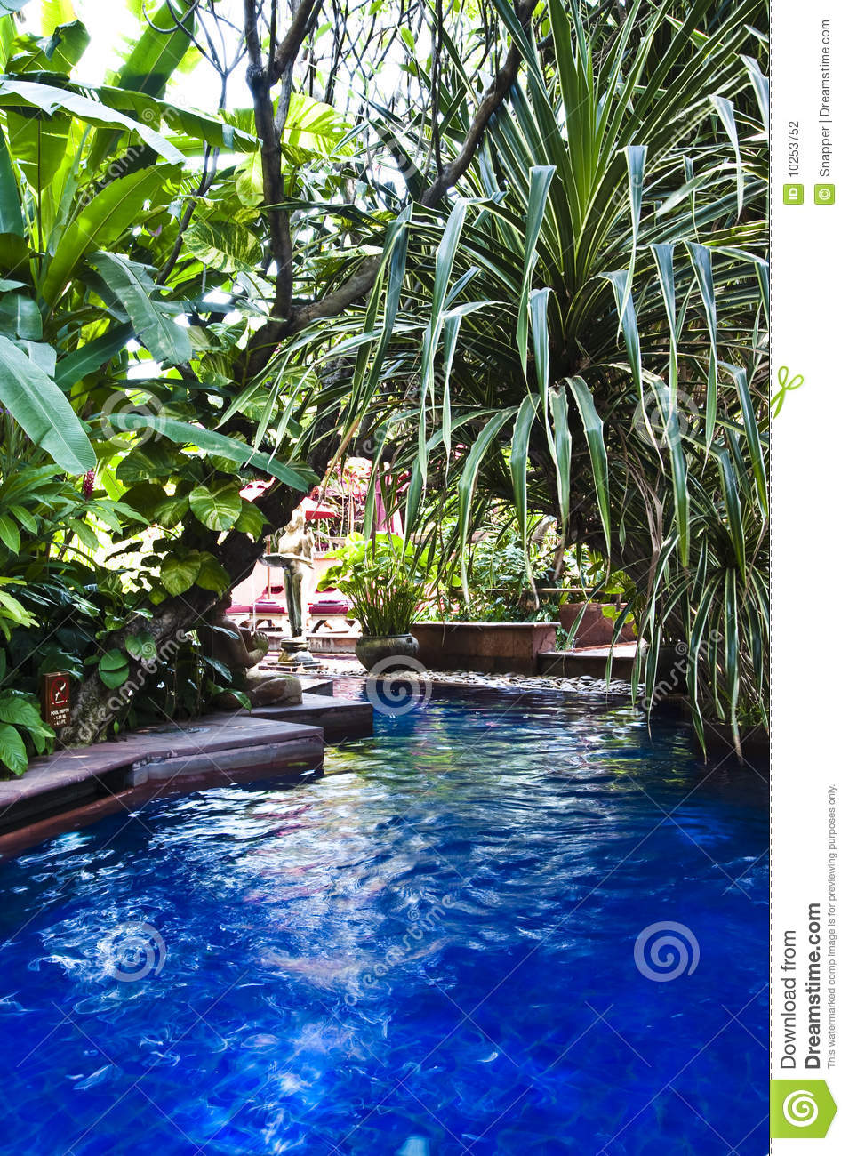 Tropical Swimming Pool Stock Photography Image 10253752