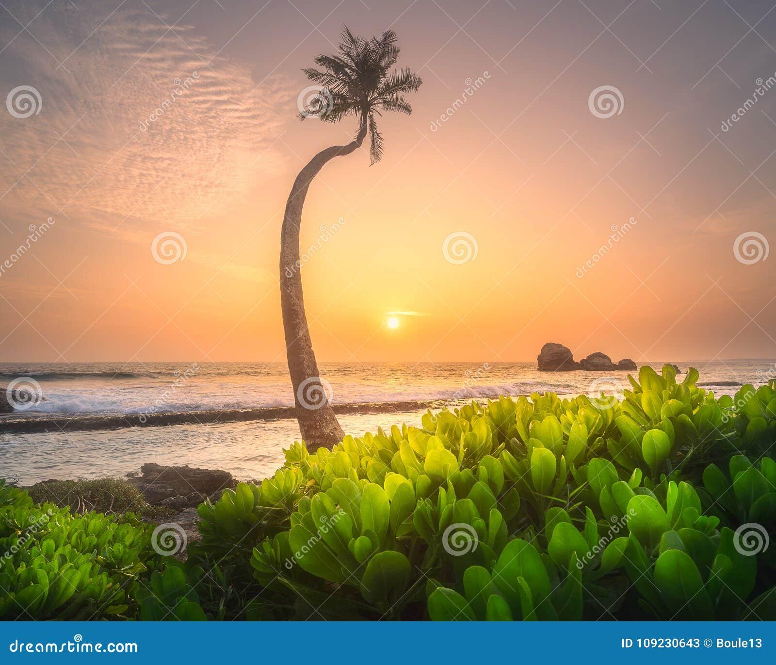 Tree under the water and coast of Sri Lanka beach