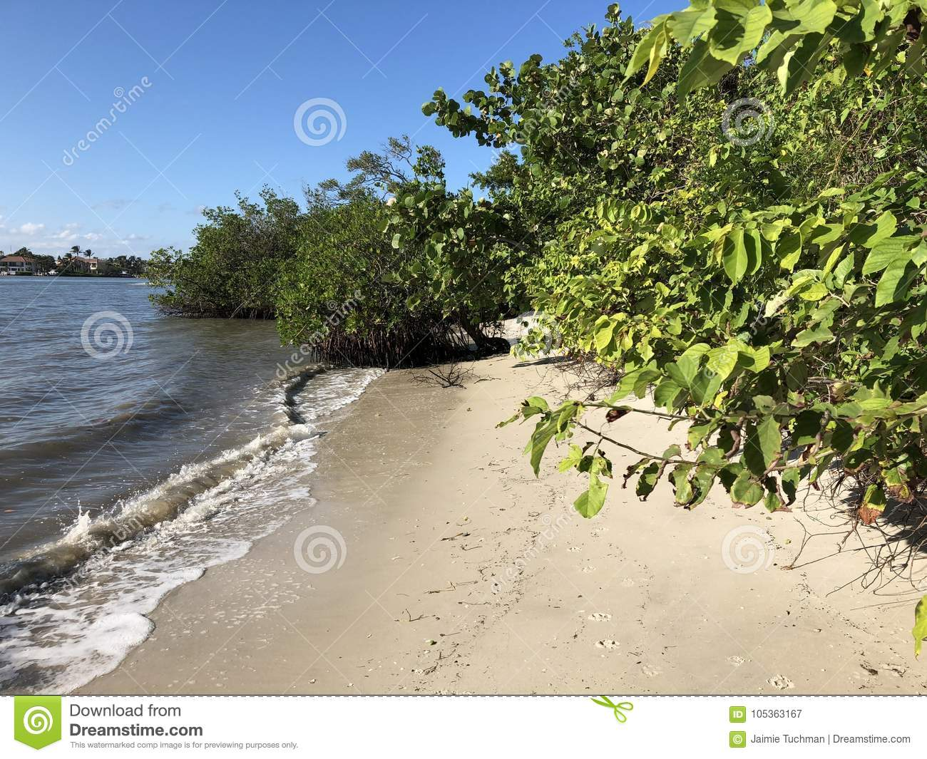 Tropical Trees On A Secluded Beach Stock Image - Image of caribbean