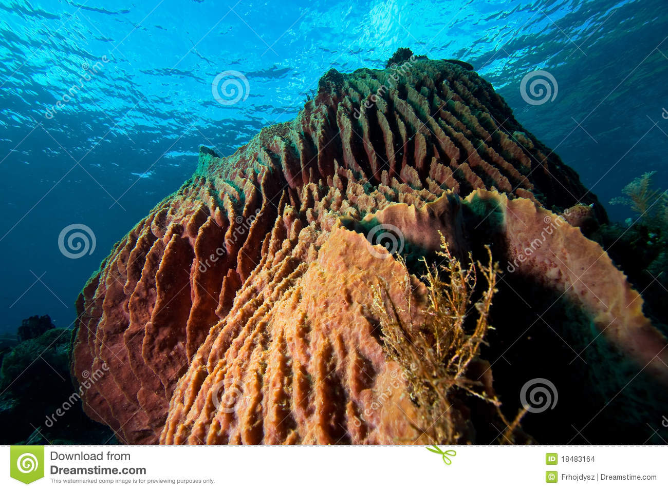 Tropical underwater mountains, underwater paradise in Indonesia.