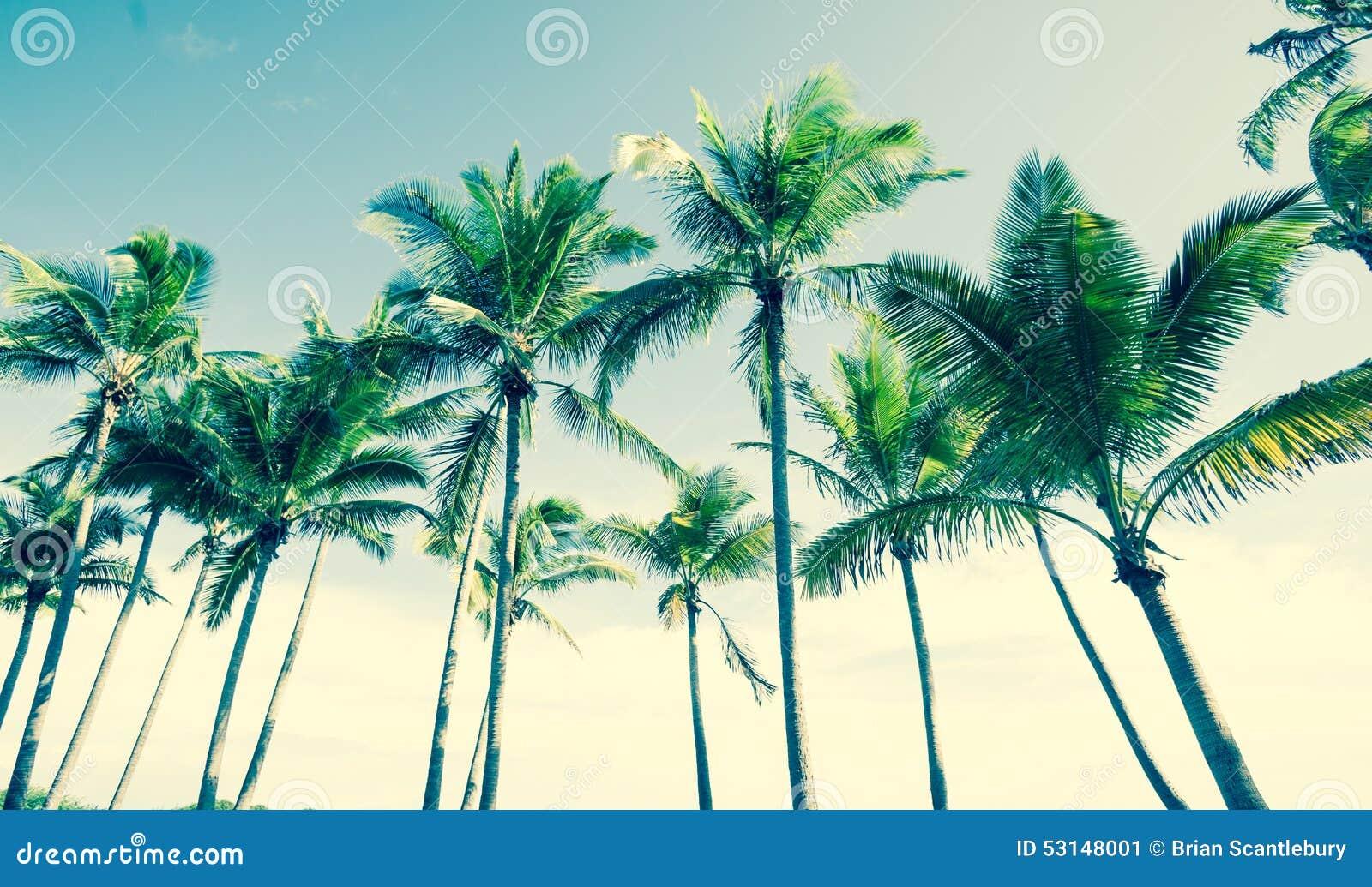 Tropical vintage palm image.