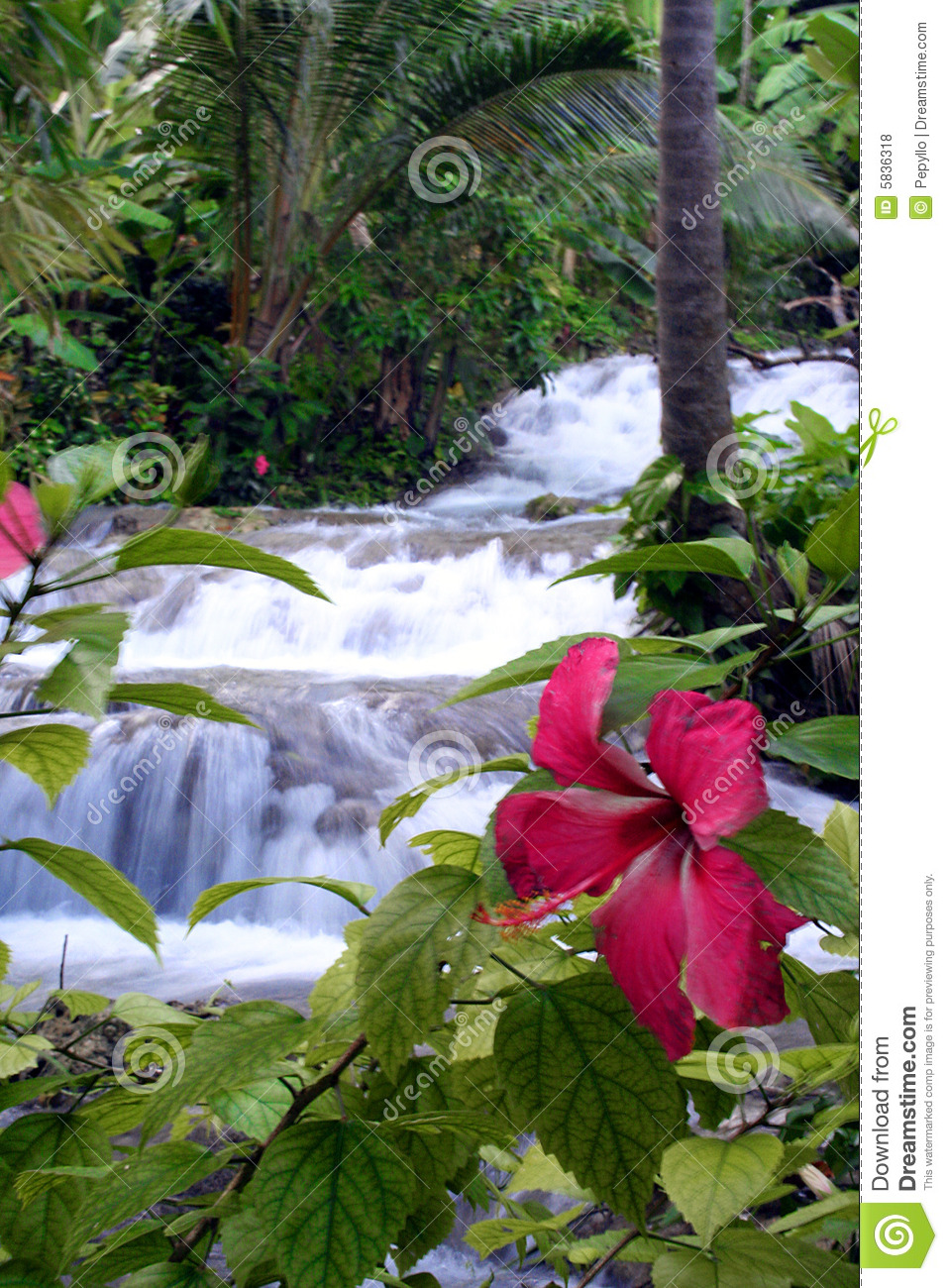 Nature Images 2mb: Tropical Waterfall Stock Photo. Image Of Nature, Outdoors