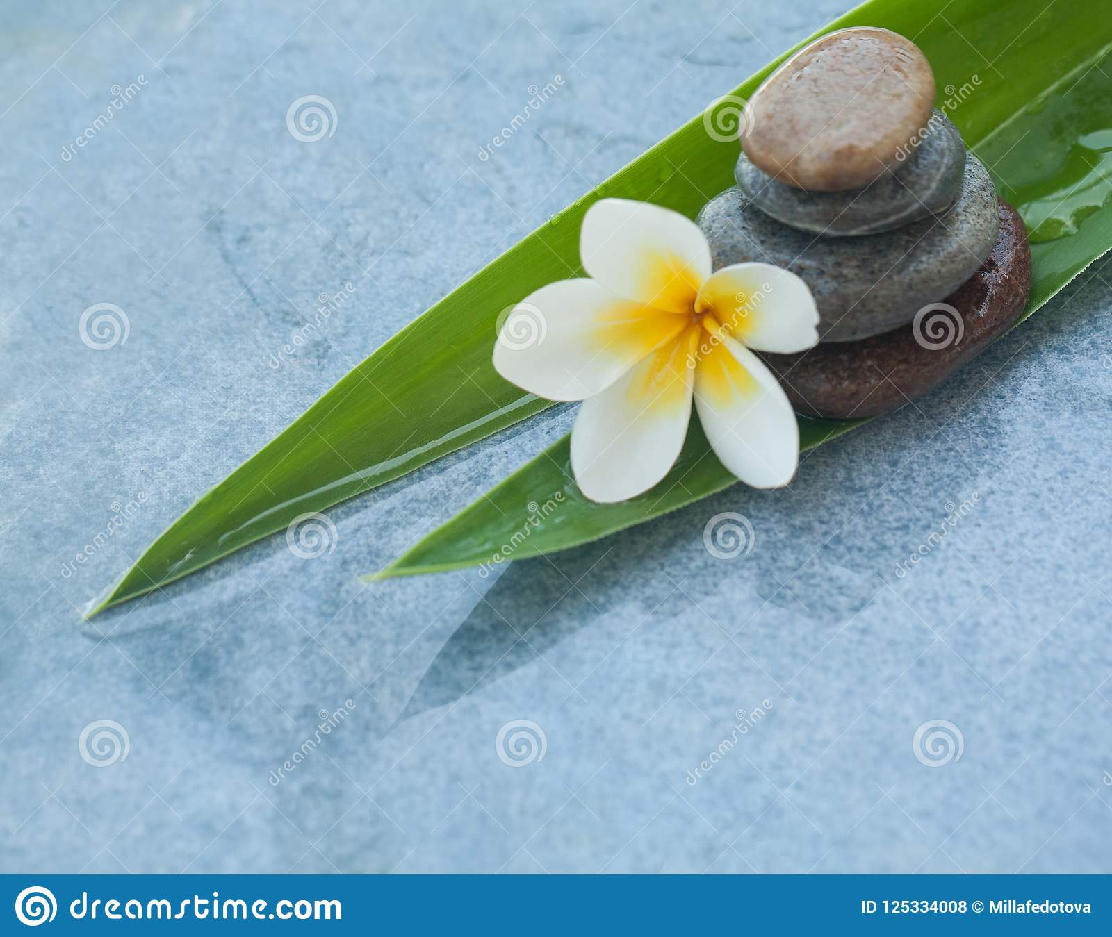 Tropical White Flower And Stones On Two Leaves Stock Photo Image