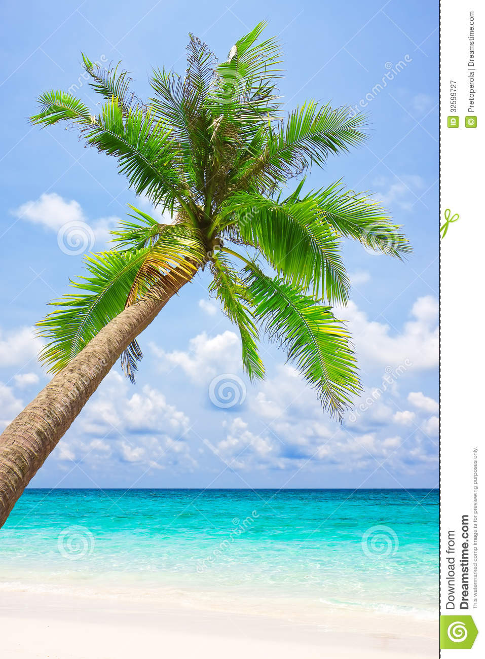 Tropical White Sand Beach With Palm Tree Stock Image