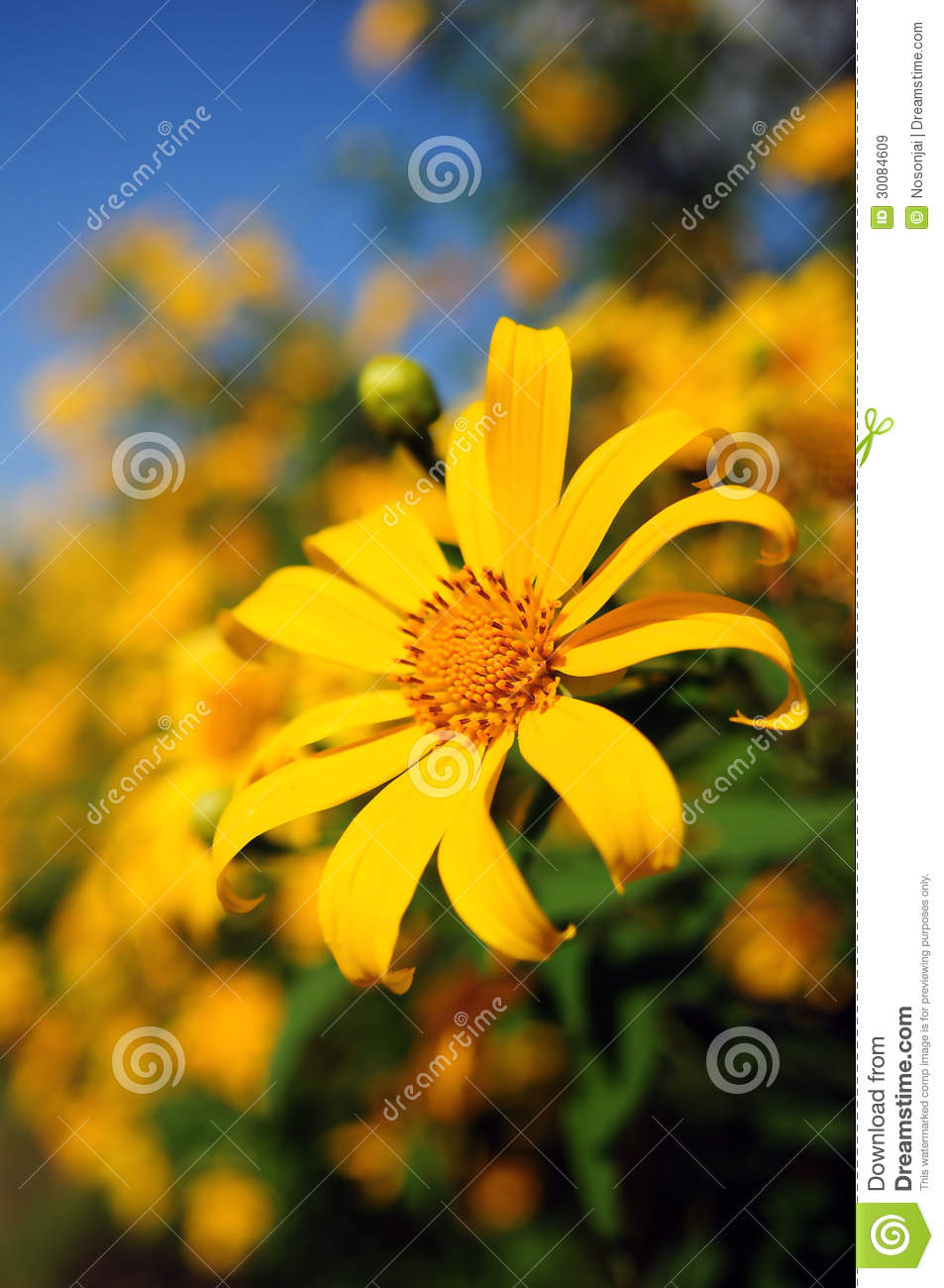 Tropical Yellow Flowers Stock Image Image Of Bright 30084609