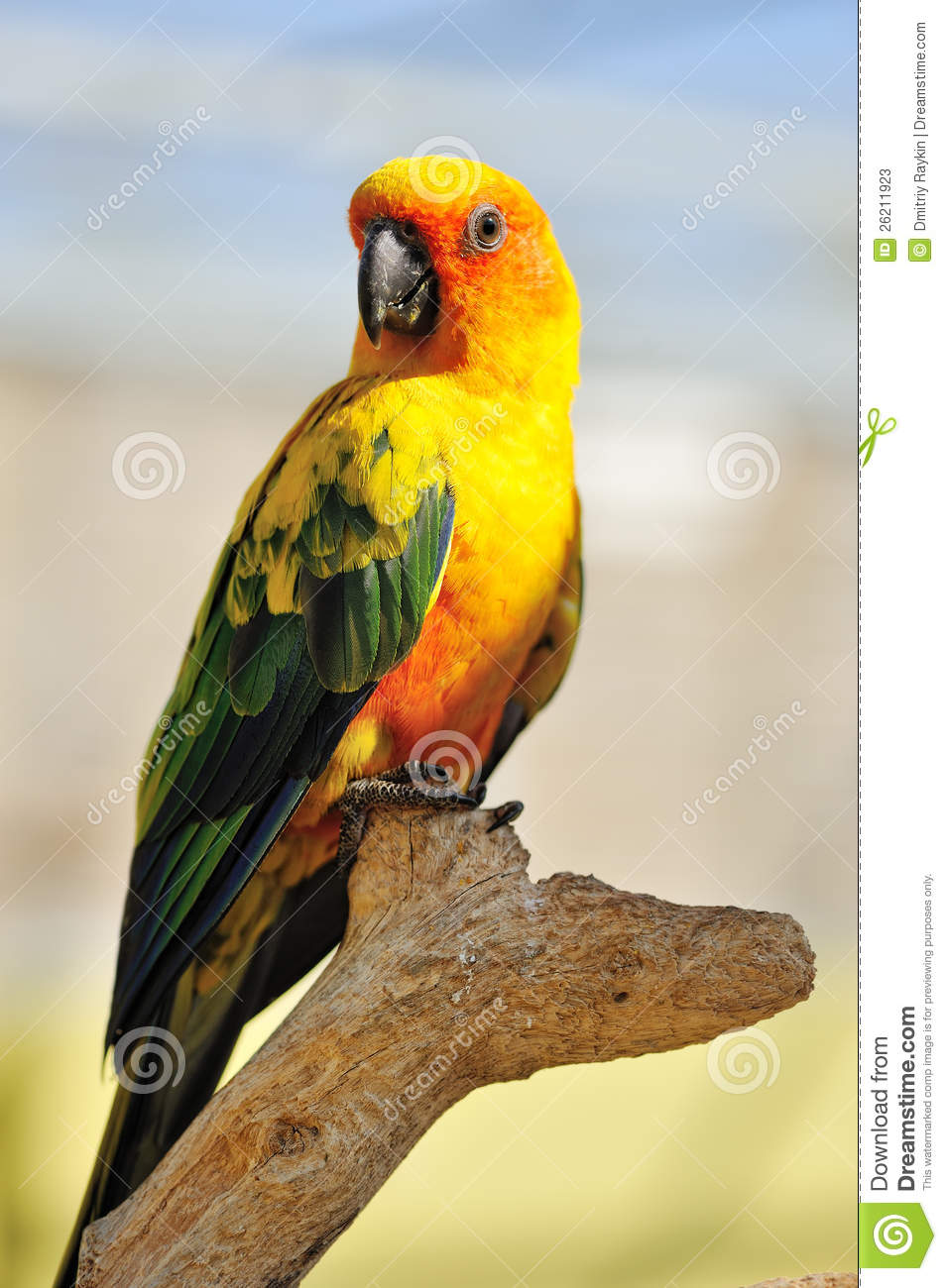 tropical yellow parrot with green wings stock image image of