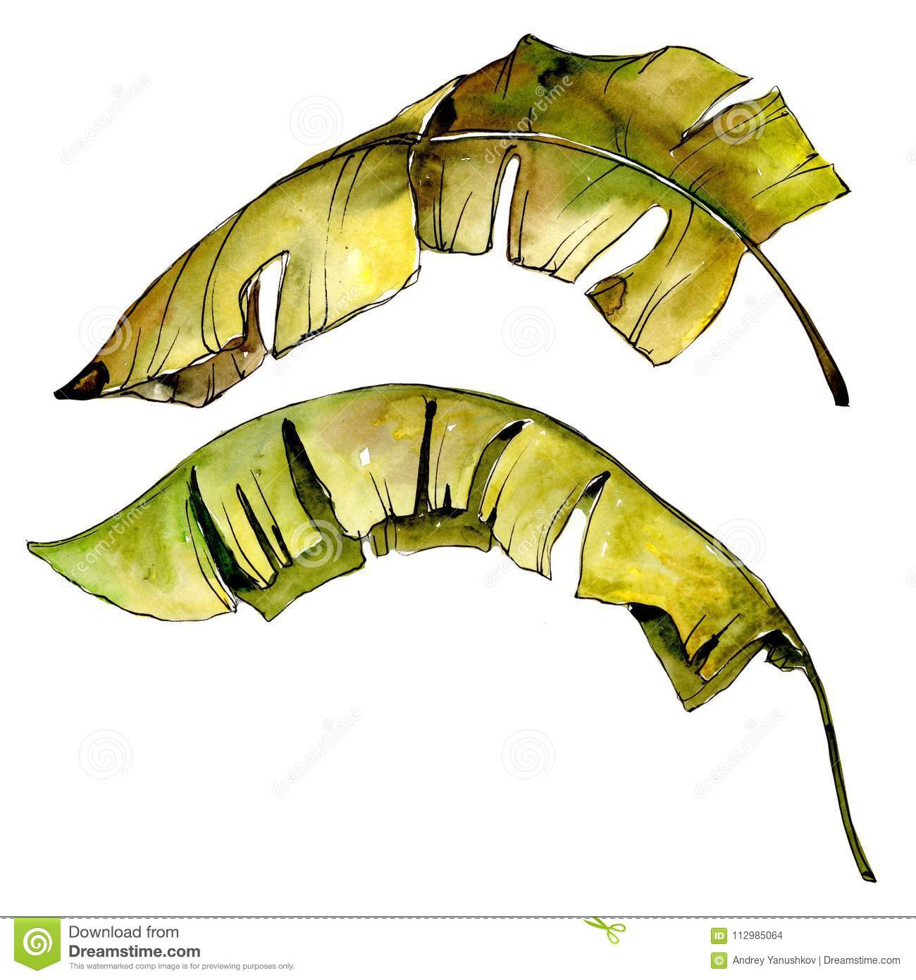 Tropics leaves in a watercolor style isolated.